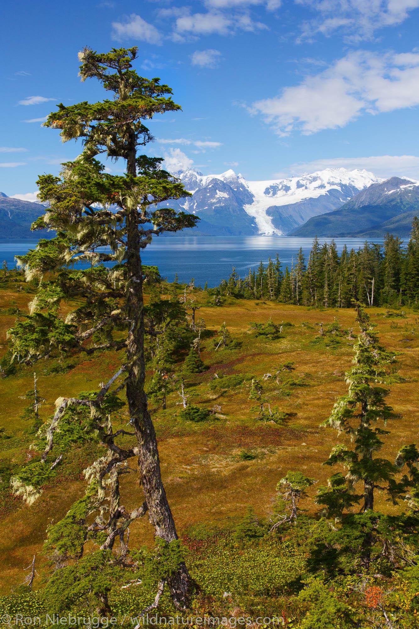Along Esther Passage and Port Wells, Prince William Sound, Chugach National Forest, Alaska.