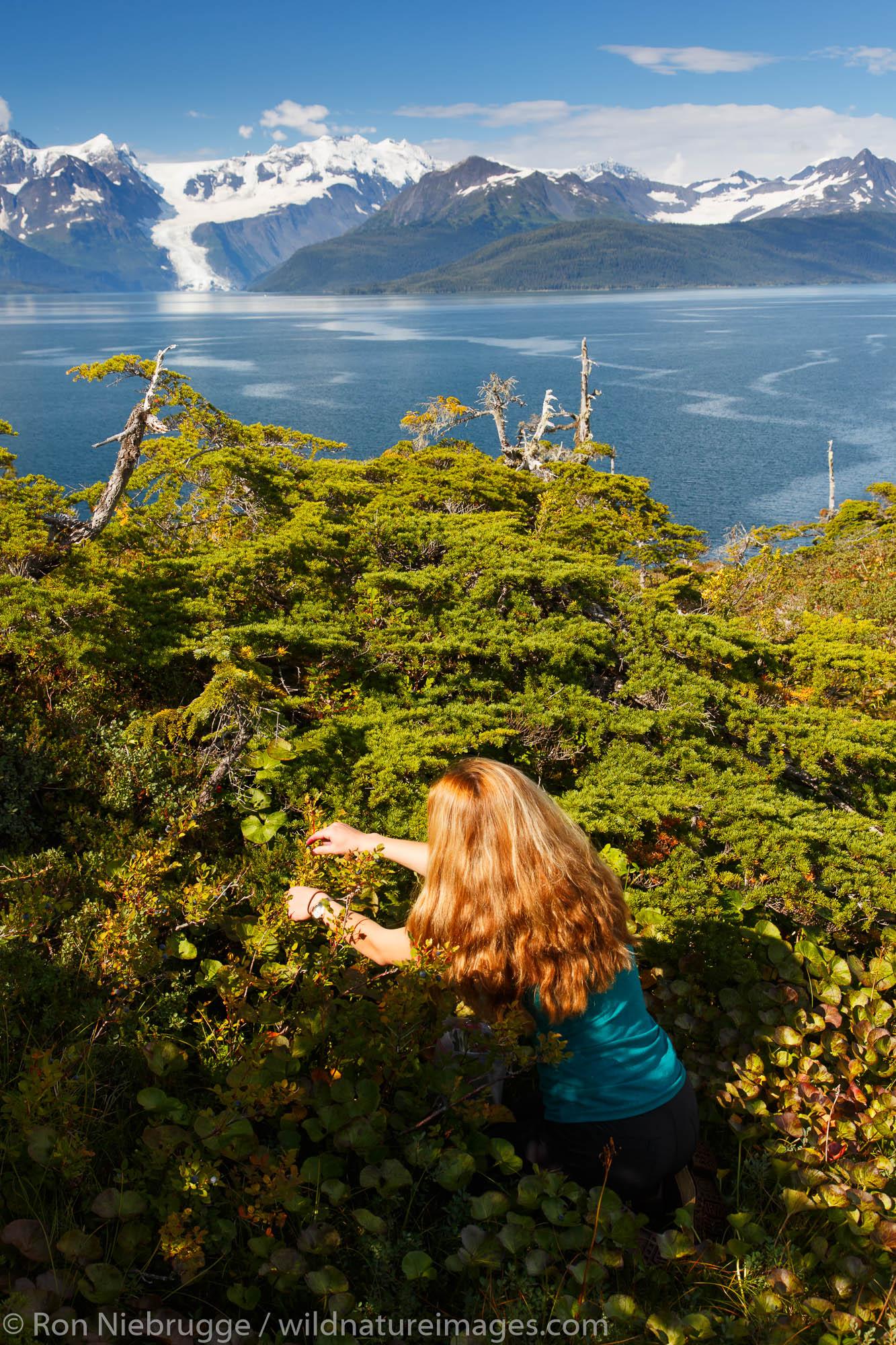 Berry picking, Prince William Sound, Chugach National Forest, Alaska.