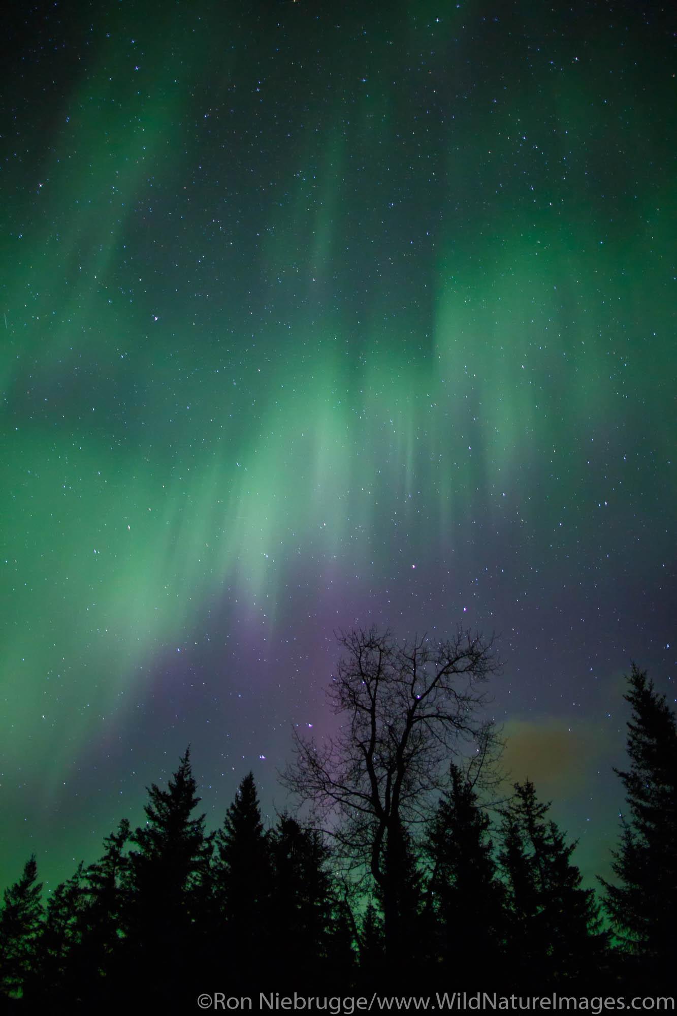 Aurora borealis over Chugach National Forest, near Seward, Alaska.