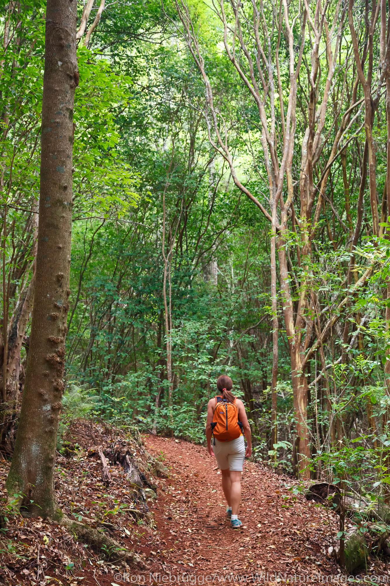 Hiking the Kahakapao LoopTrail, Makawao Forest Reserve, Maui, Hawaii.  (model released)