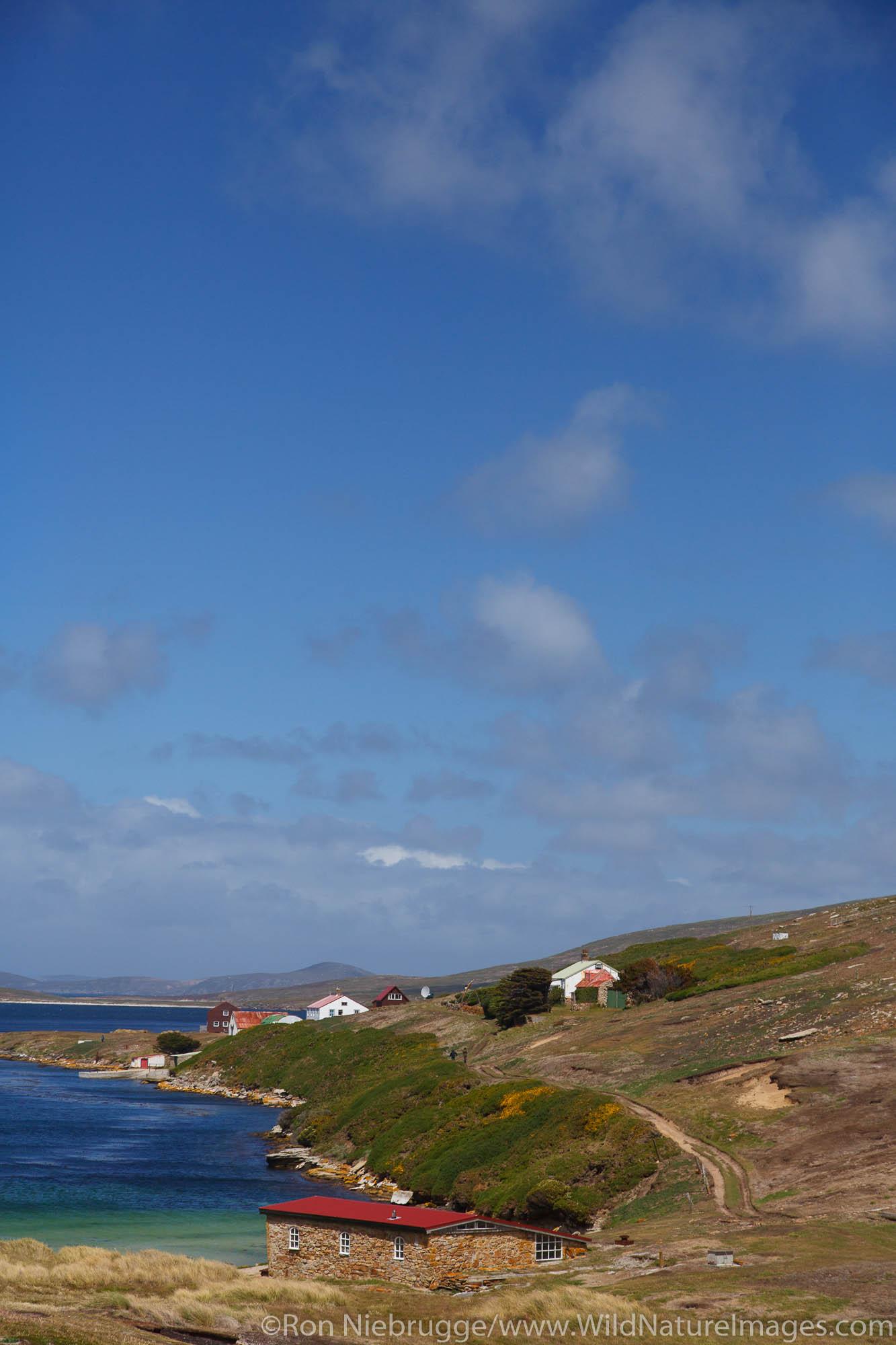 New Island Conservation Trust, New Island, Falkland Islands.