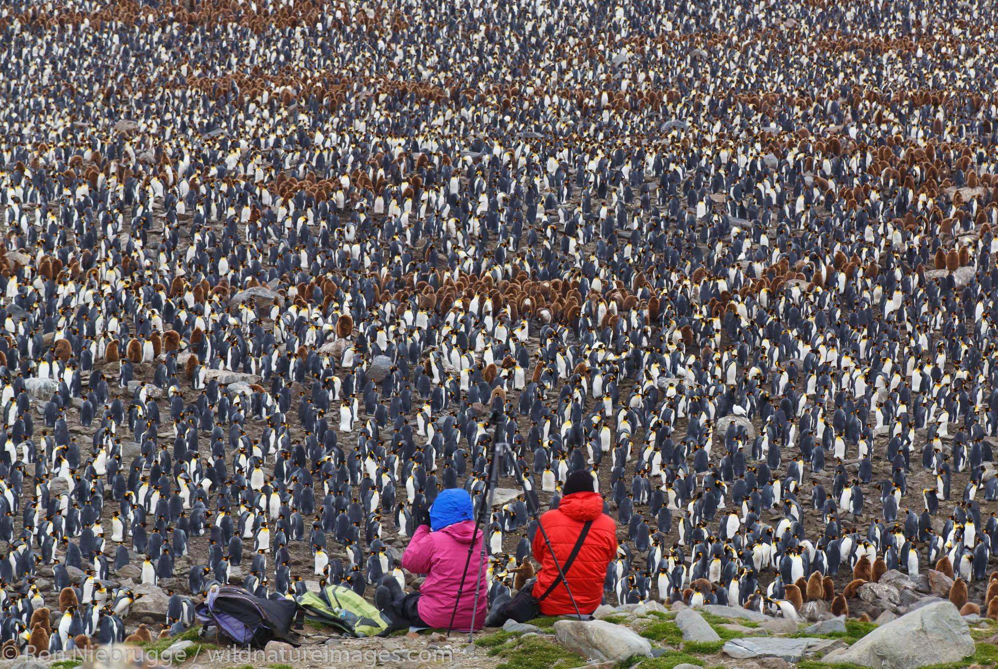 Visitors at a King penguin colony (Aptenodytes patagonicus), Saint Andrews Bay, South Georgia, Antarctica.