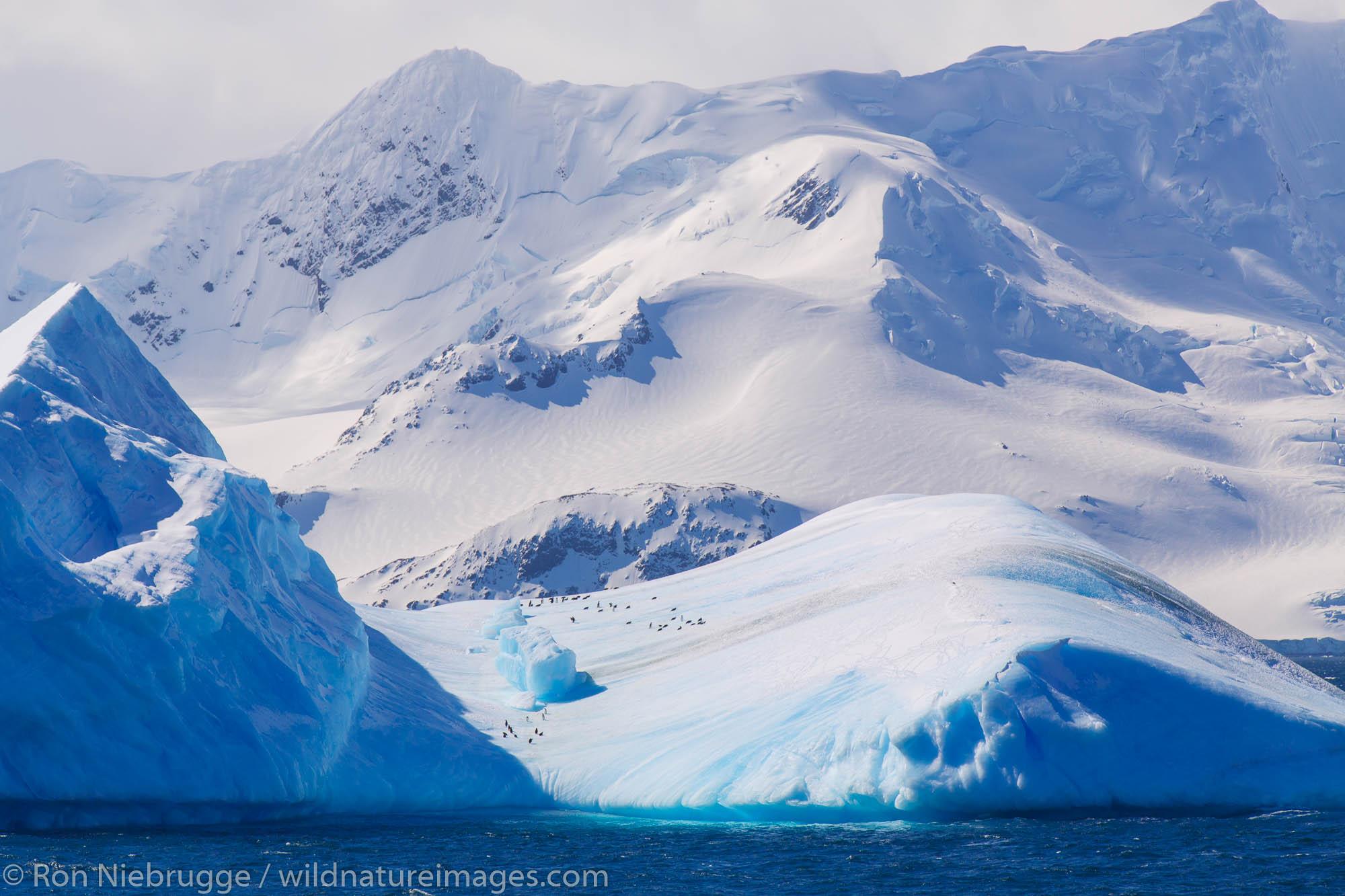 Elephant Island, Antarctica.