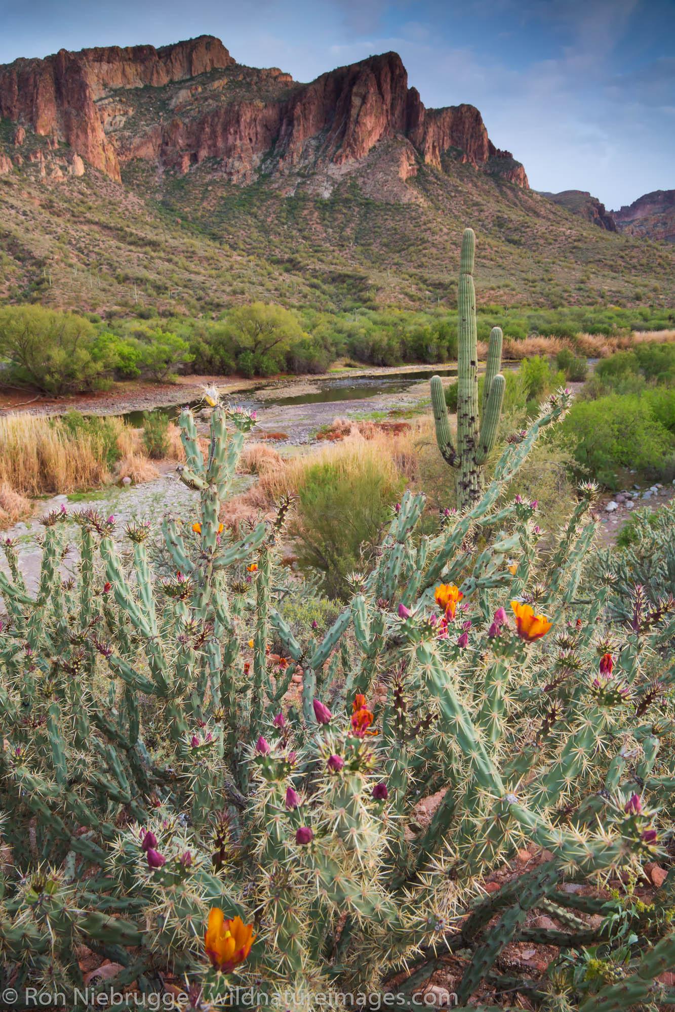 Salt River, Tonto National Forest, East of Phoenix, Arizona.