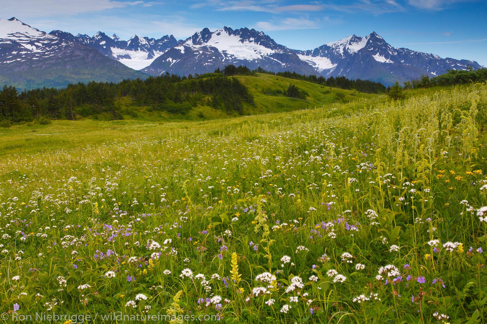 Along the Lost Lake Loop Trail, Chugach National Forest, Seward, Alaska.