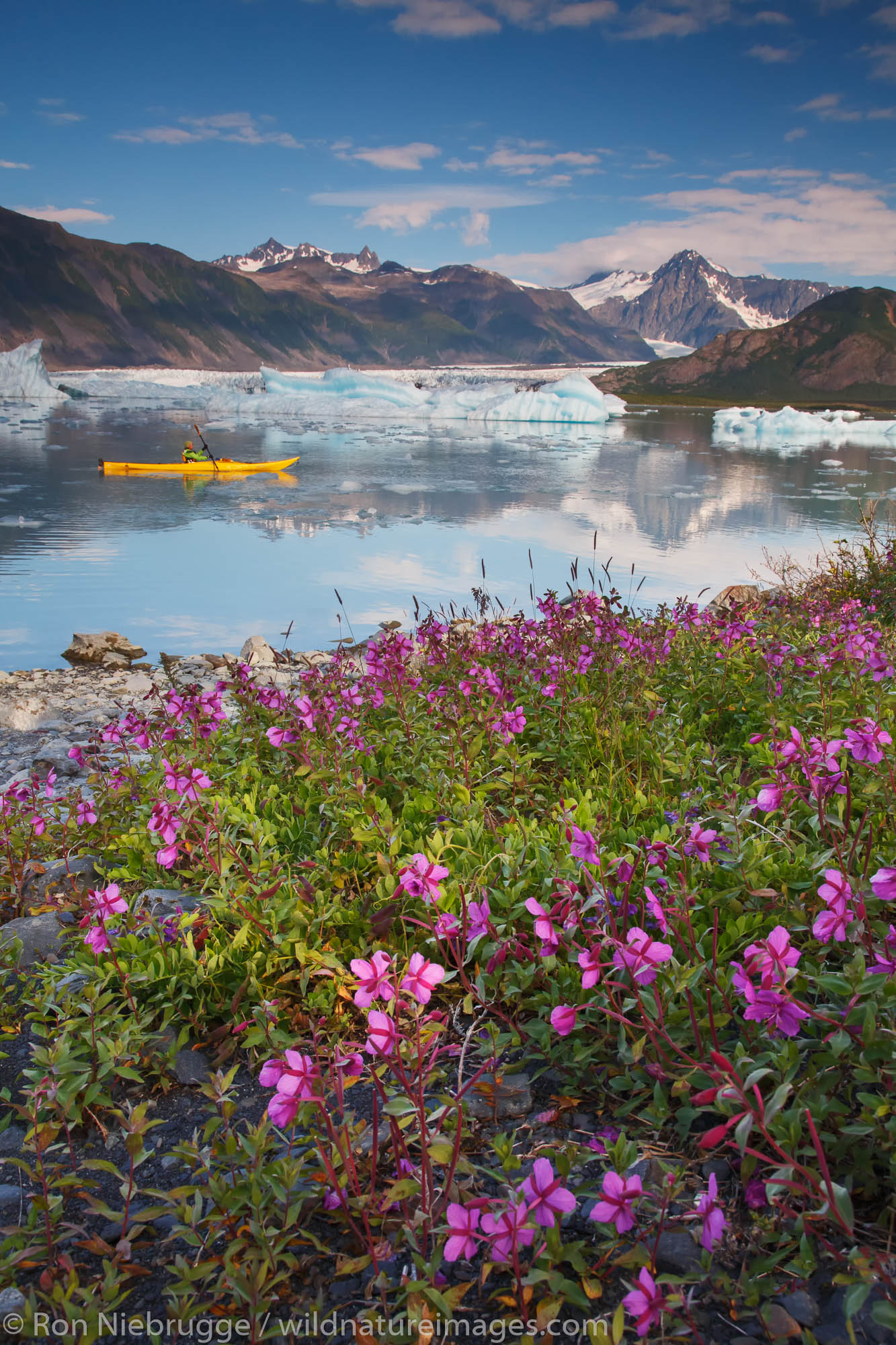 Kayaking in Bear Glacier Lagoon, Kenai Fjords National Park near Seward, Alaska.