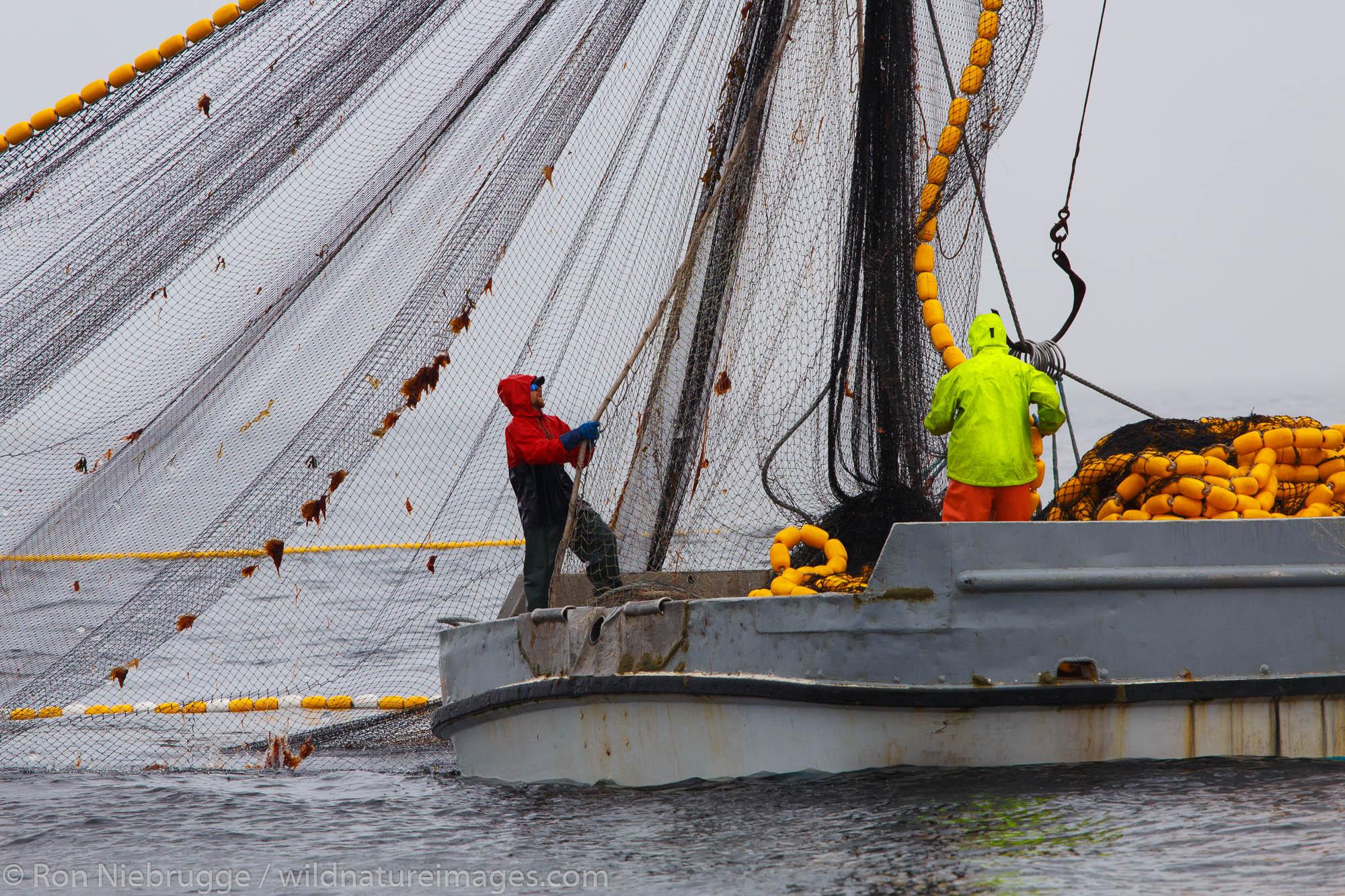 Commercial fishing boats salmon seining near Ketchikan, Alaska.