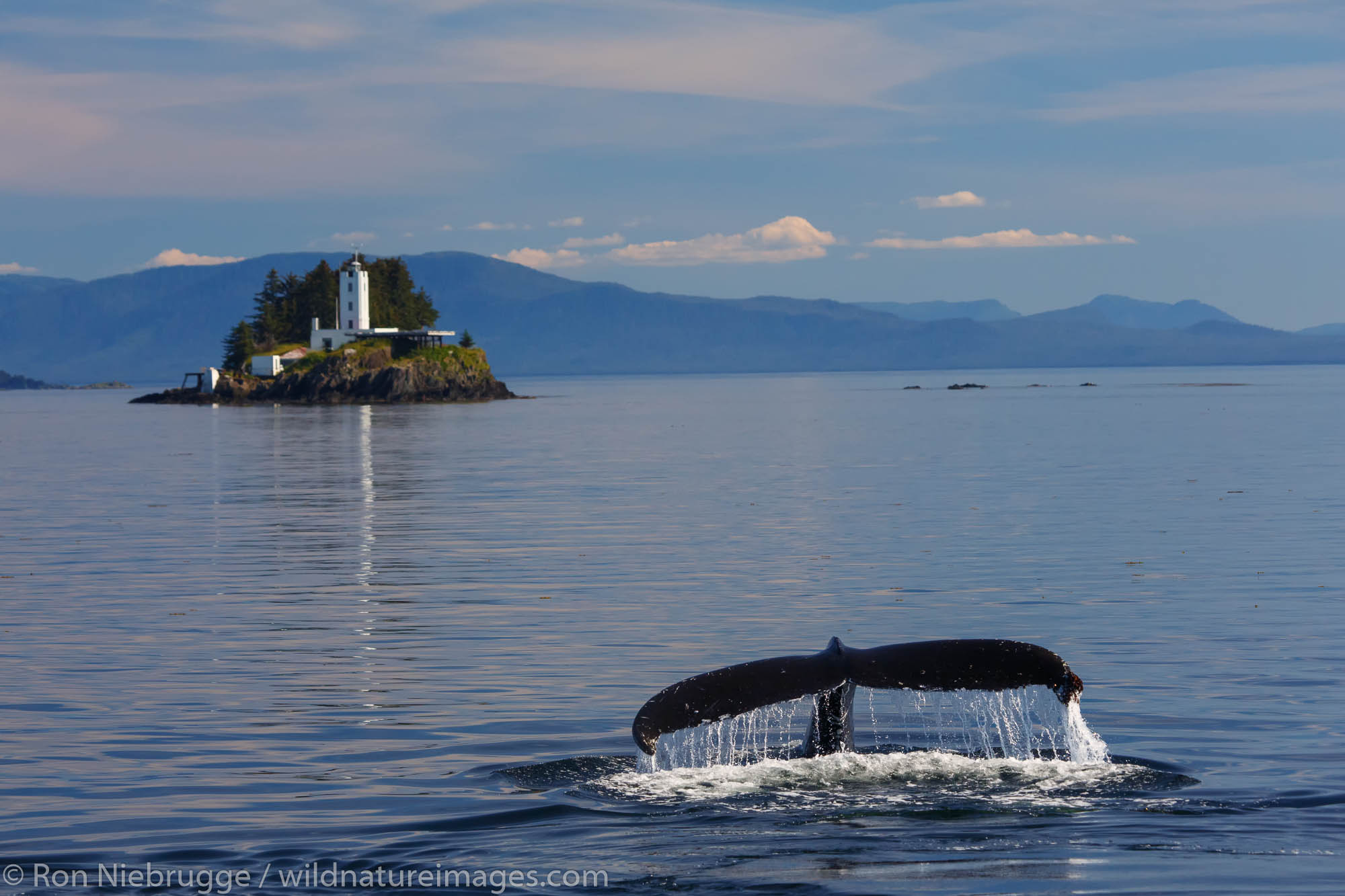 Humpback whales and the Five Finger Lighthouse, Tongass National Forest, Alaska.