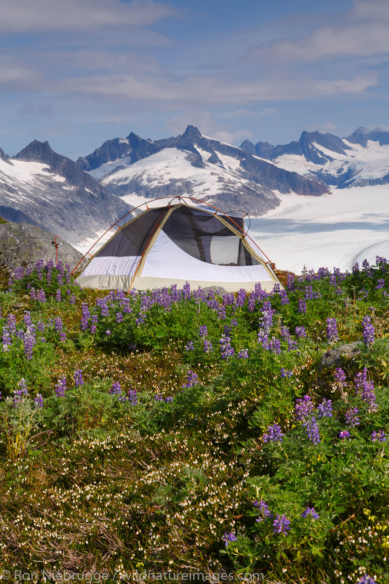 Camping on Mount Stroller White above the Mendenhall Glacier, Tongass National Forest, Alaska.