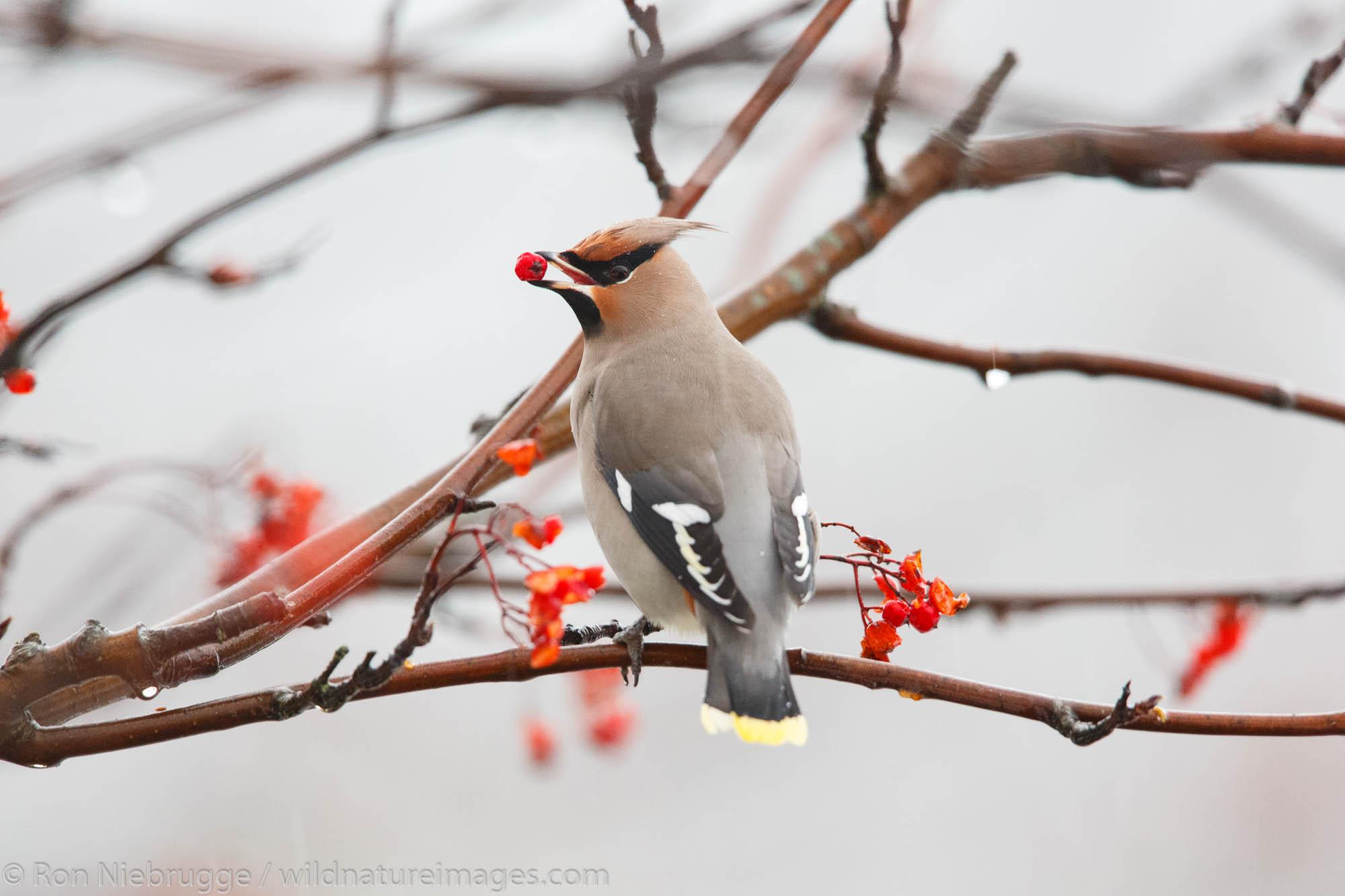 bird, photos, photo