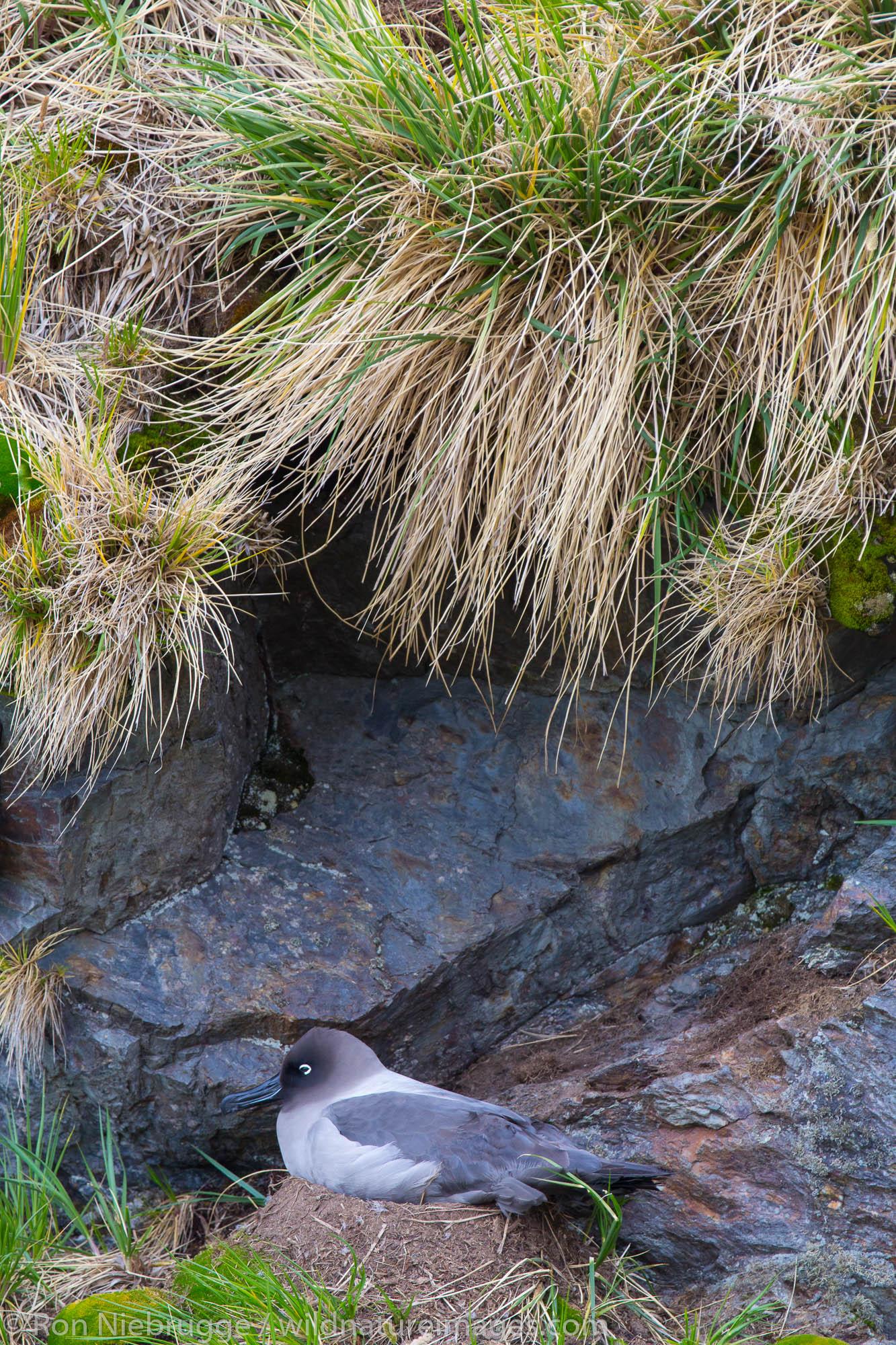 Antarctica, bird, photos, photo