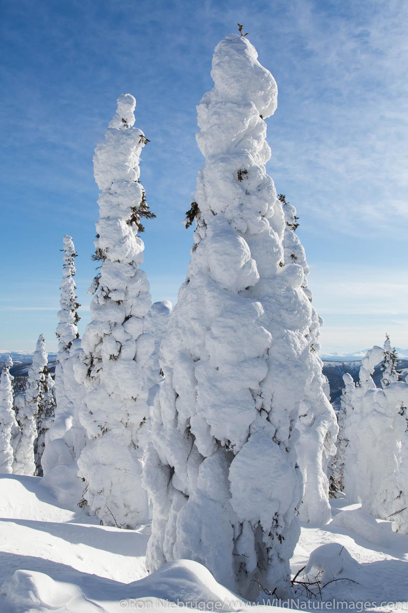 Winter along the Dalton Highway, Alaska.