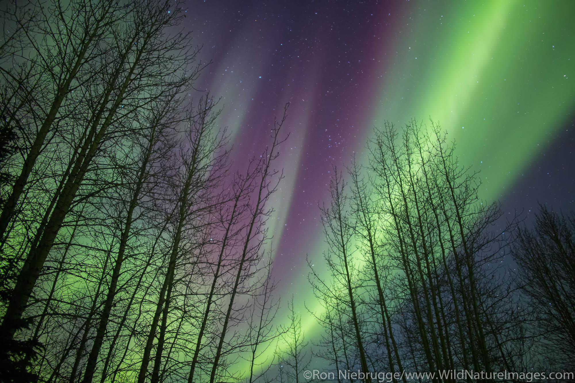Aurora Borealis over the Brooks Range Alaska.