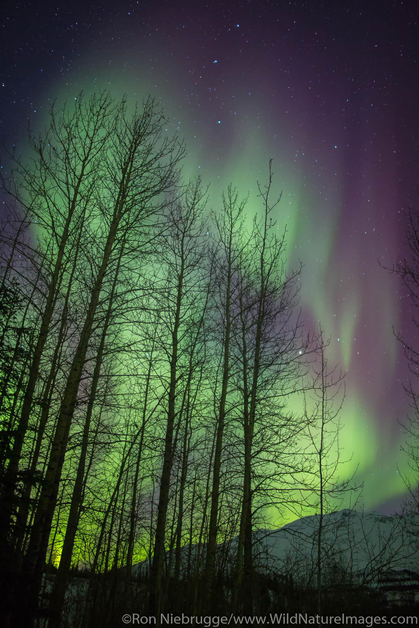 Aurora Borealis over the Brooks Range, Alaska.