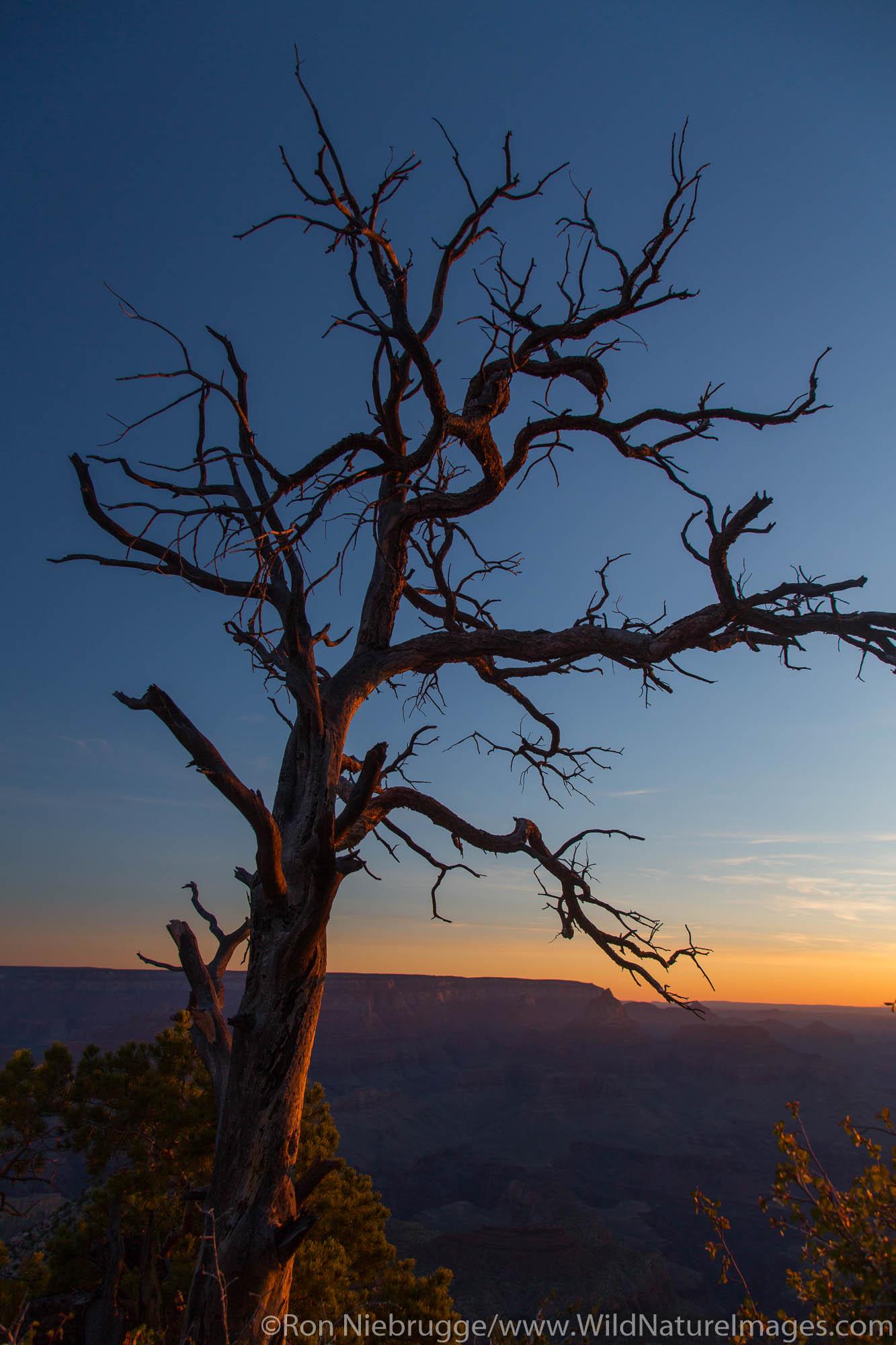 Grand Canyon National Park, Arizona.