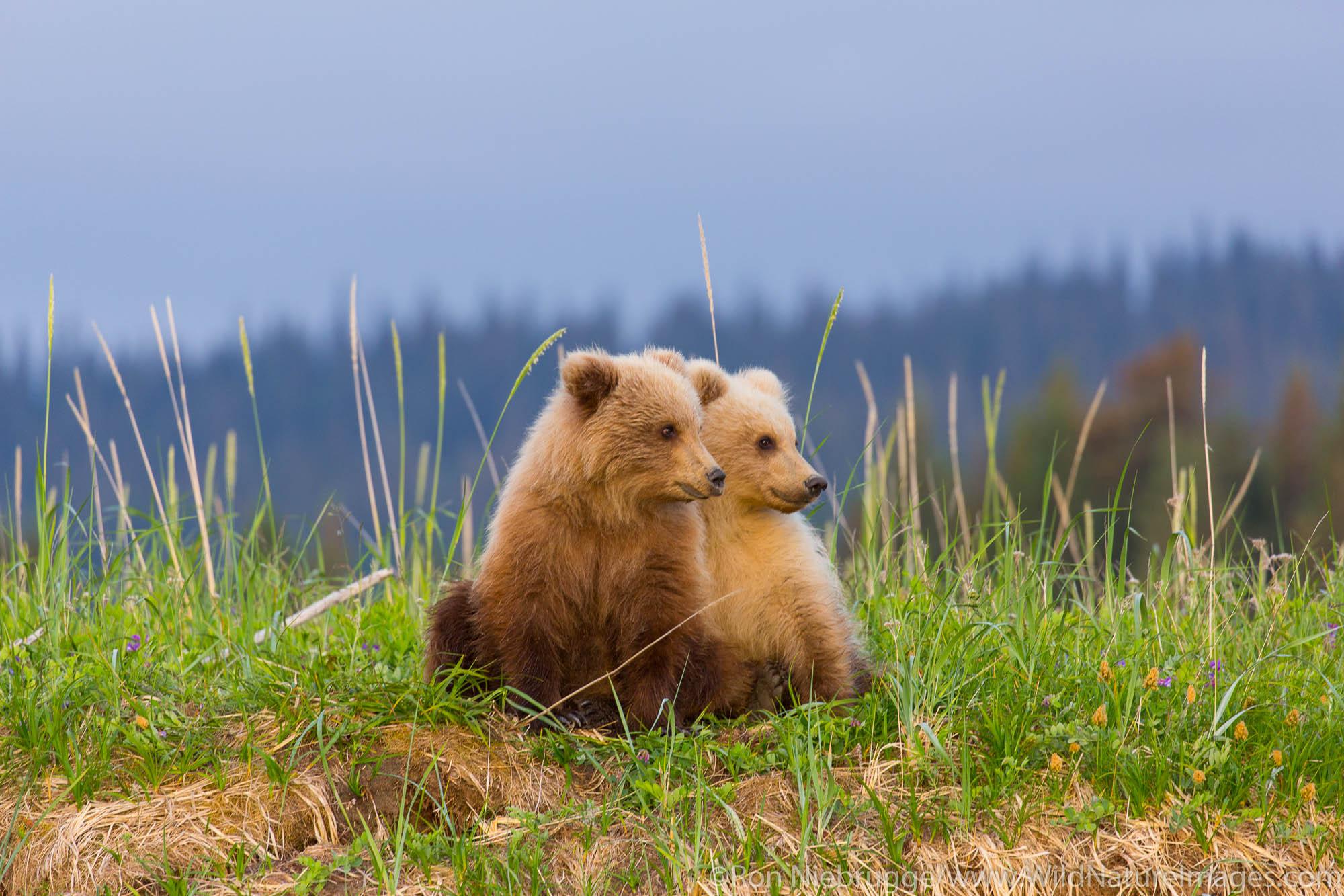 Lake Clark National Park, Alaska, , bear, photos, photo