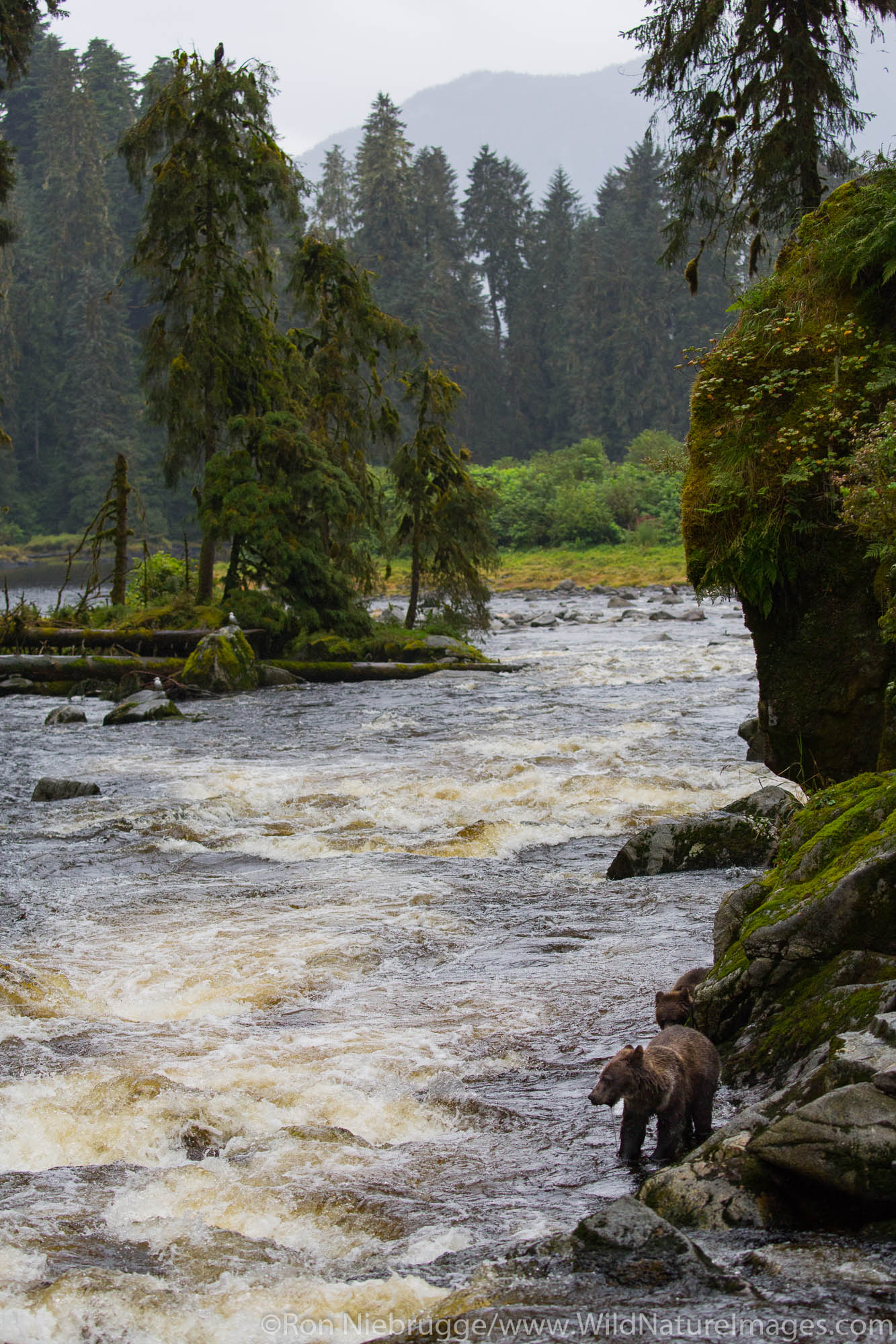 Anan Creek Wildlife Viewing Site, Tongass National Forest, Alaska.