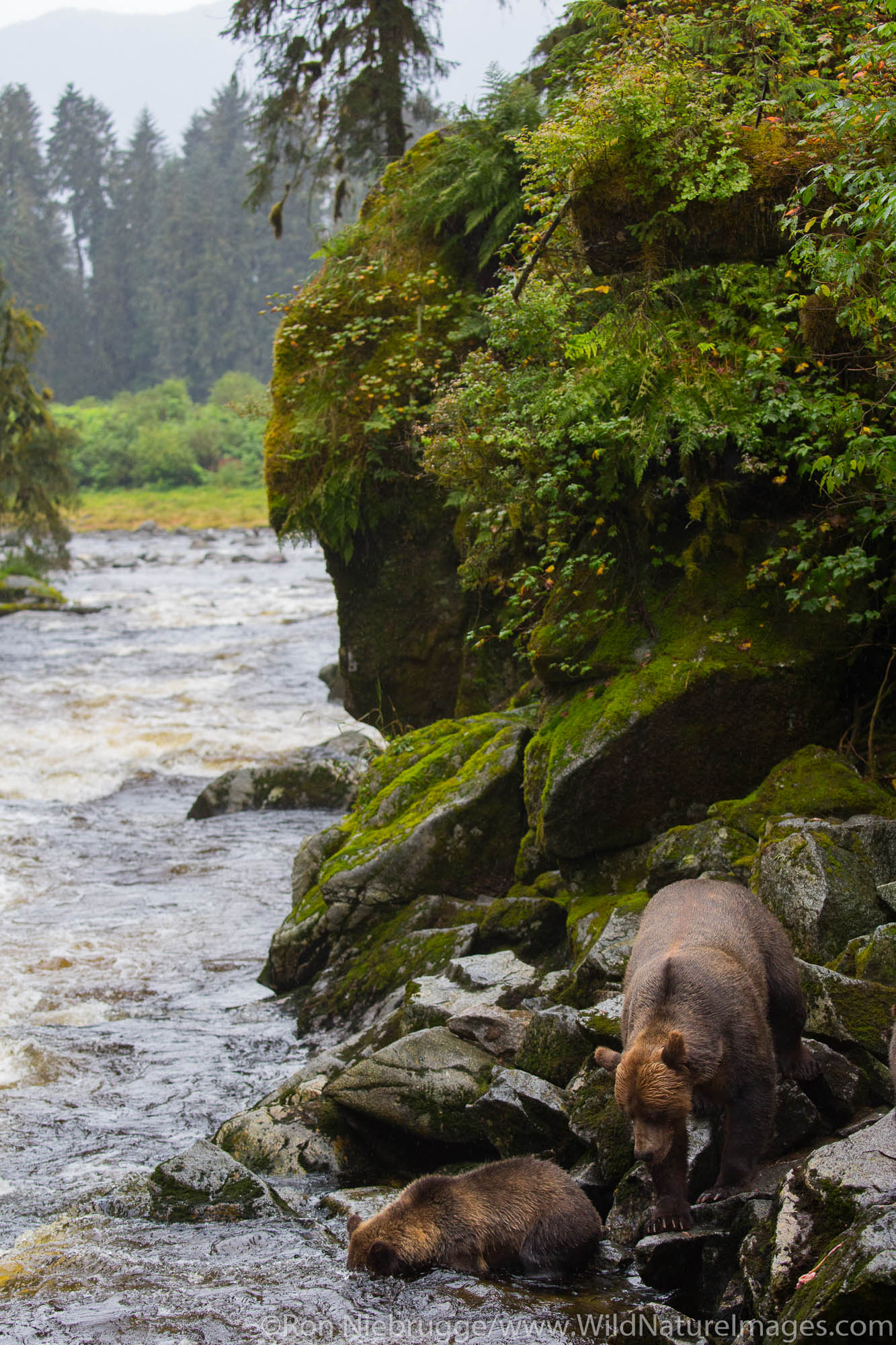 Anan Creek Wildlife Viewing Site, Tongass National Forest, Alaska.