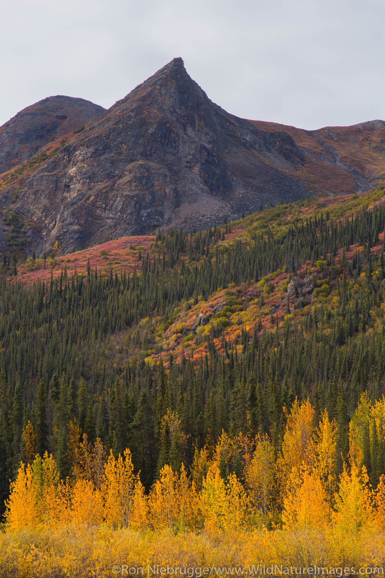 Autumn colors along the Dalton Highway, Alaska.