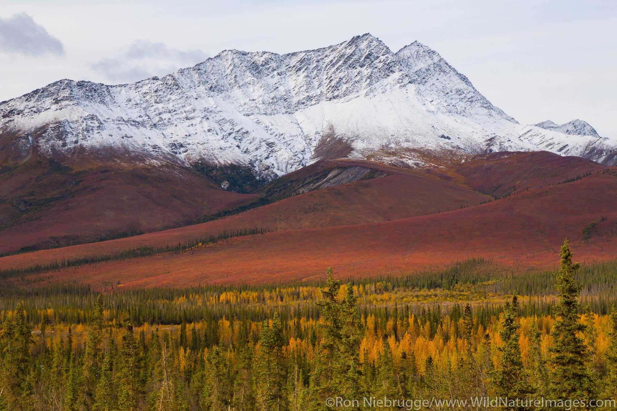 Autumn colors along the Dalton Highway Alaska.
