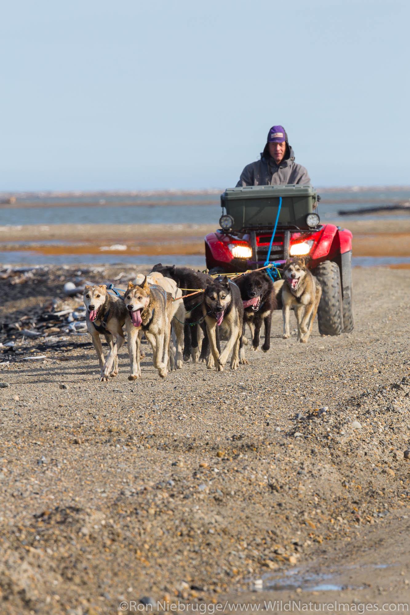 Ketil Reitan training his dog team,  Arctic National Wildlife Refuge, Alaska.