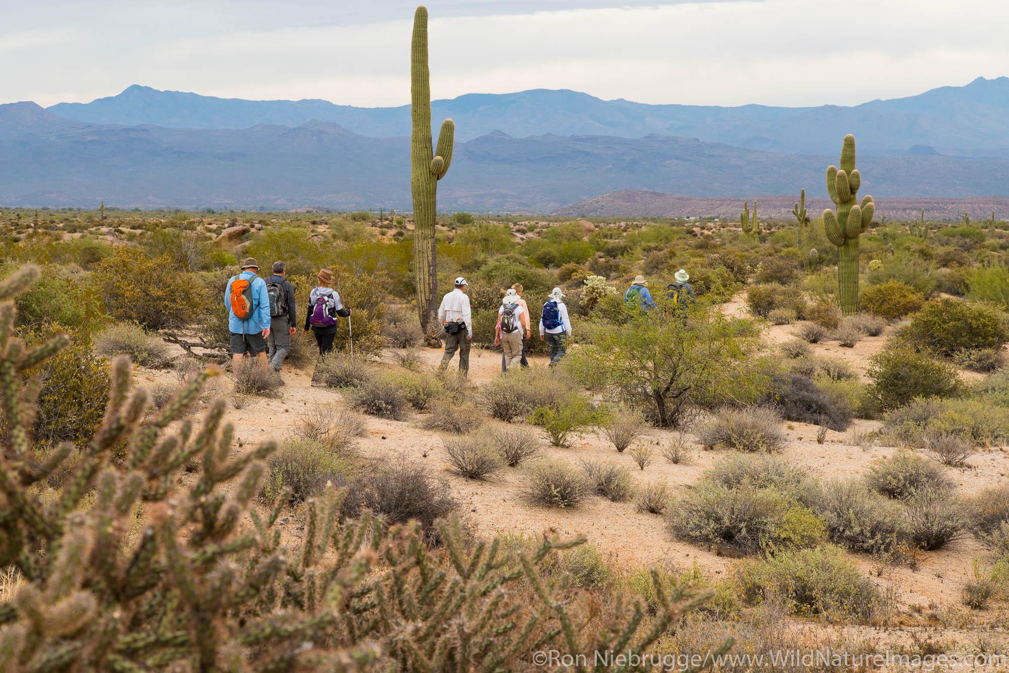 Hiking, McDowell Mountain Regional Park, Near Fountain Hills and East of Phoenix, Arizona.