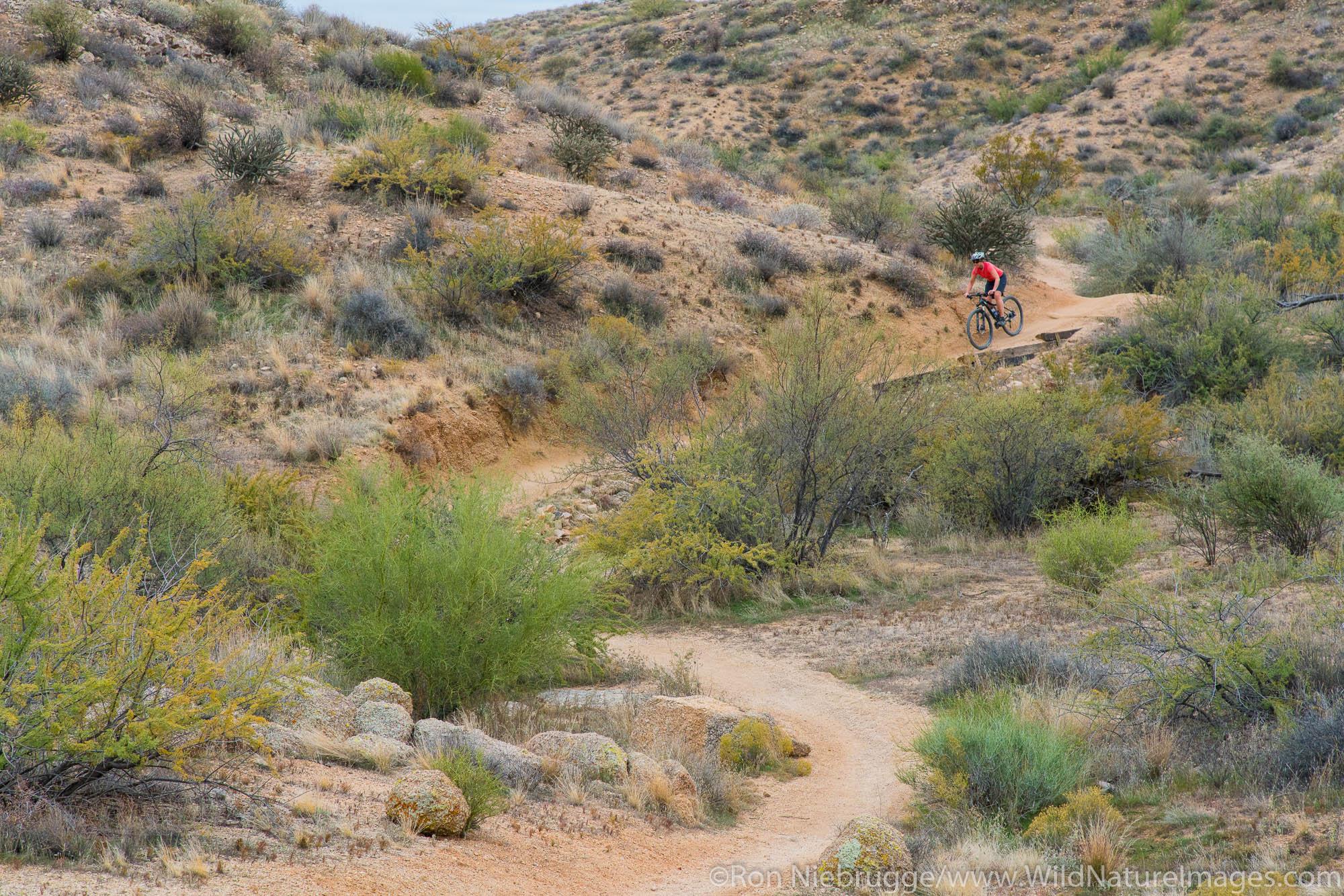 Mountain Biking, McDowell Mountain Regional Park, Near Fountain Hills and East of Phoenix, Arizona.