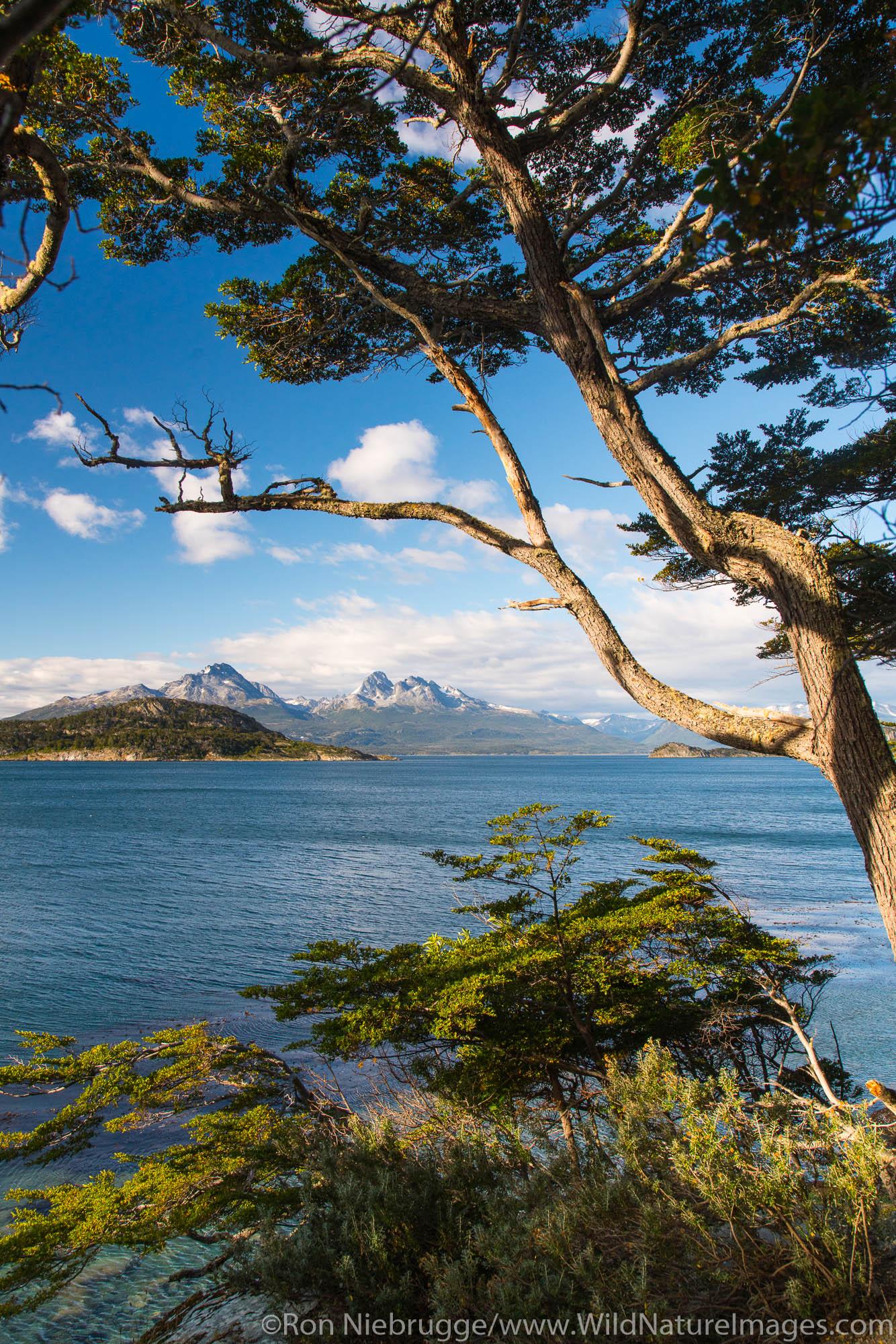 Tierra del Fuego National Park, Ushuaia, Argentina.