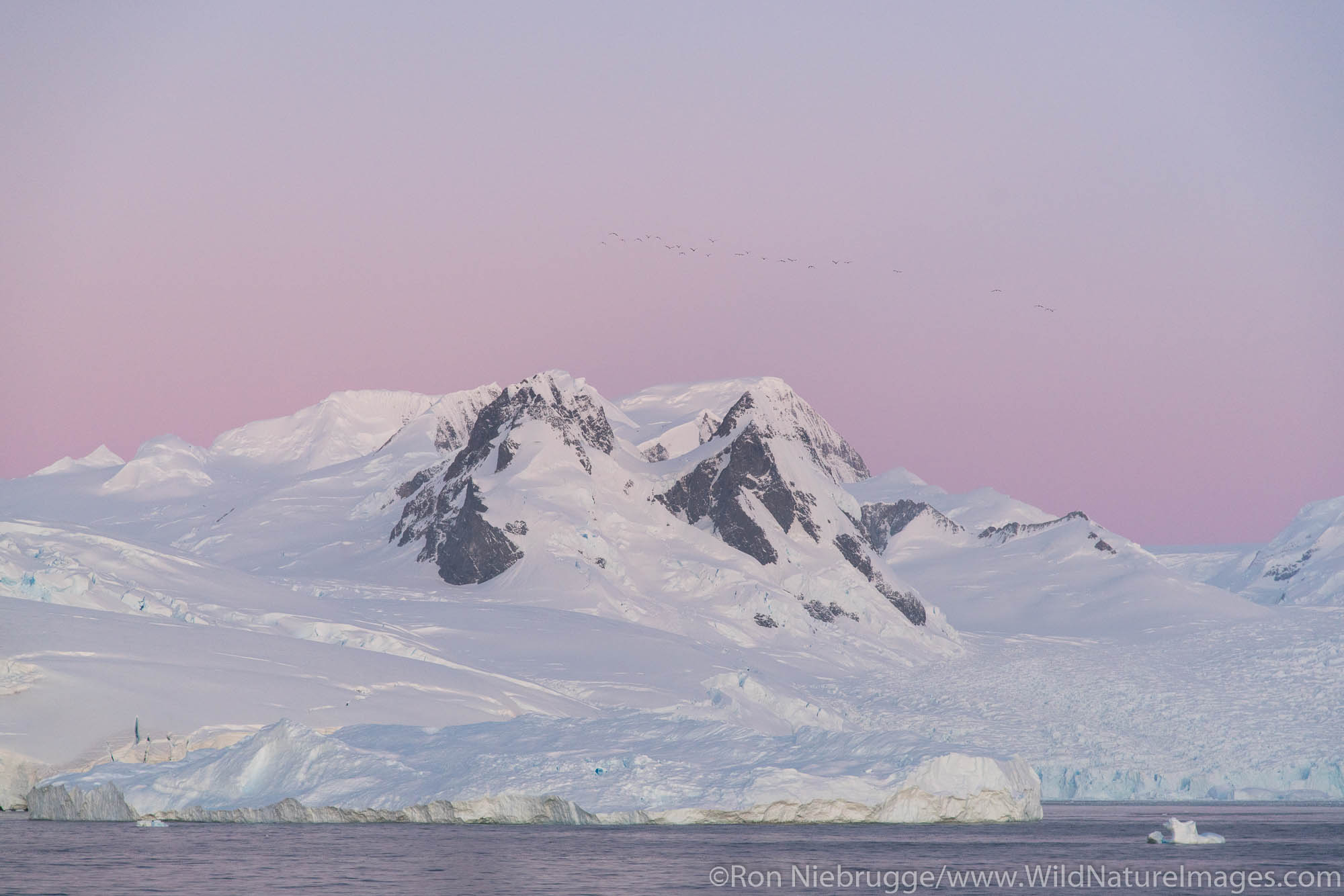 Cierva Cove, Antarctica.