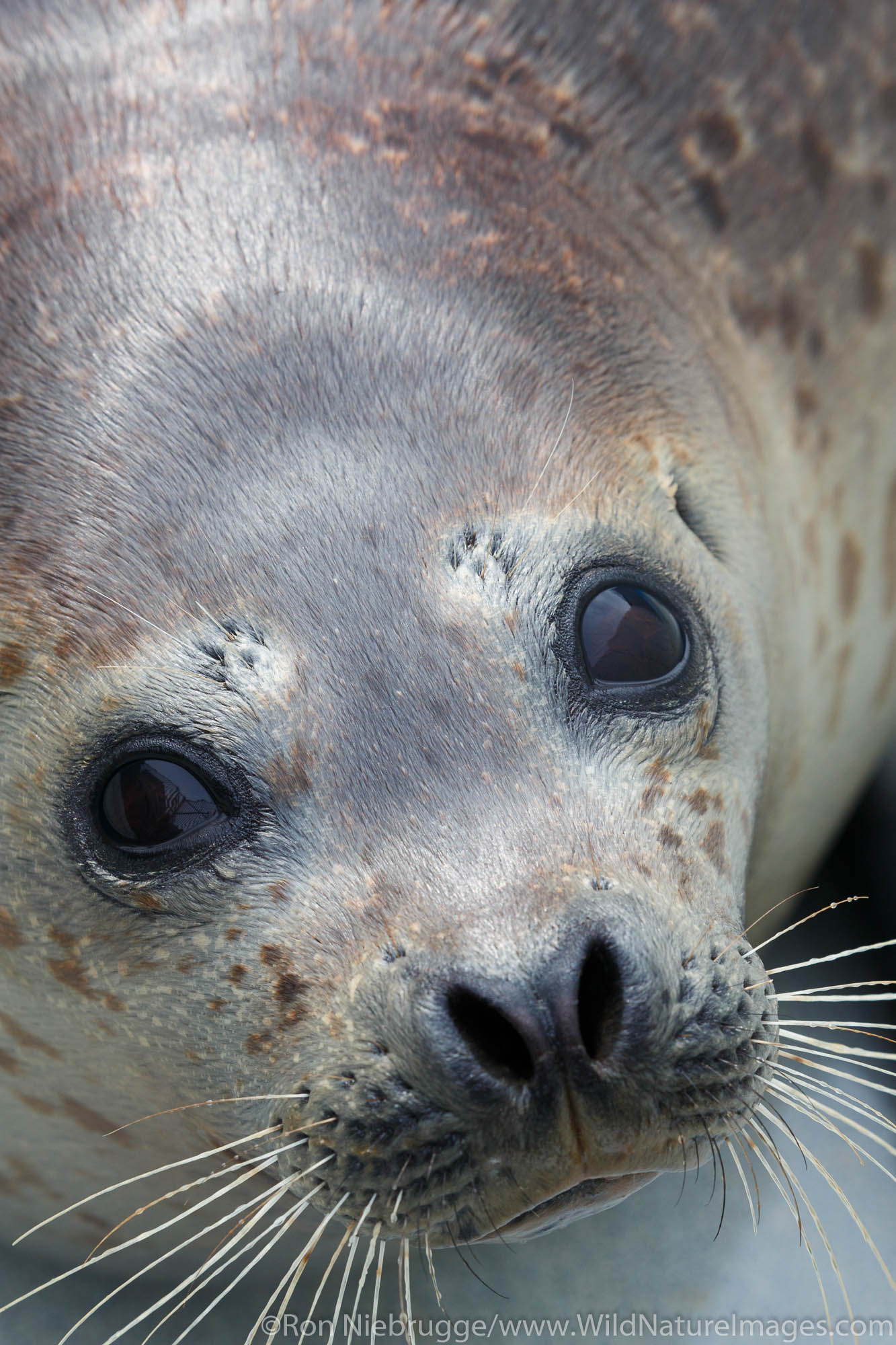 Seal, Alaska SeaLife Center, Seward, Alaska