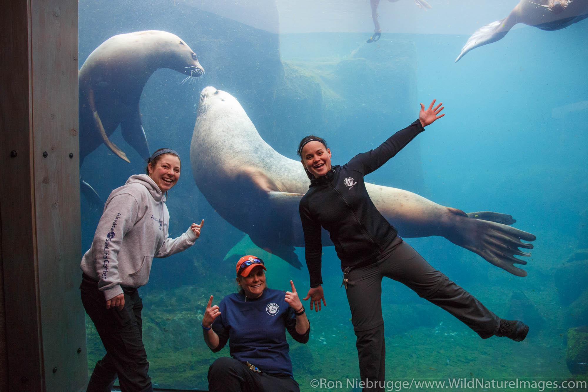 Steller Sea Lion, Alaska SeaLife Center, Seward, Alaska.