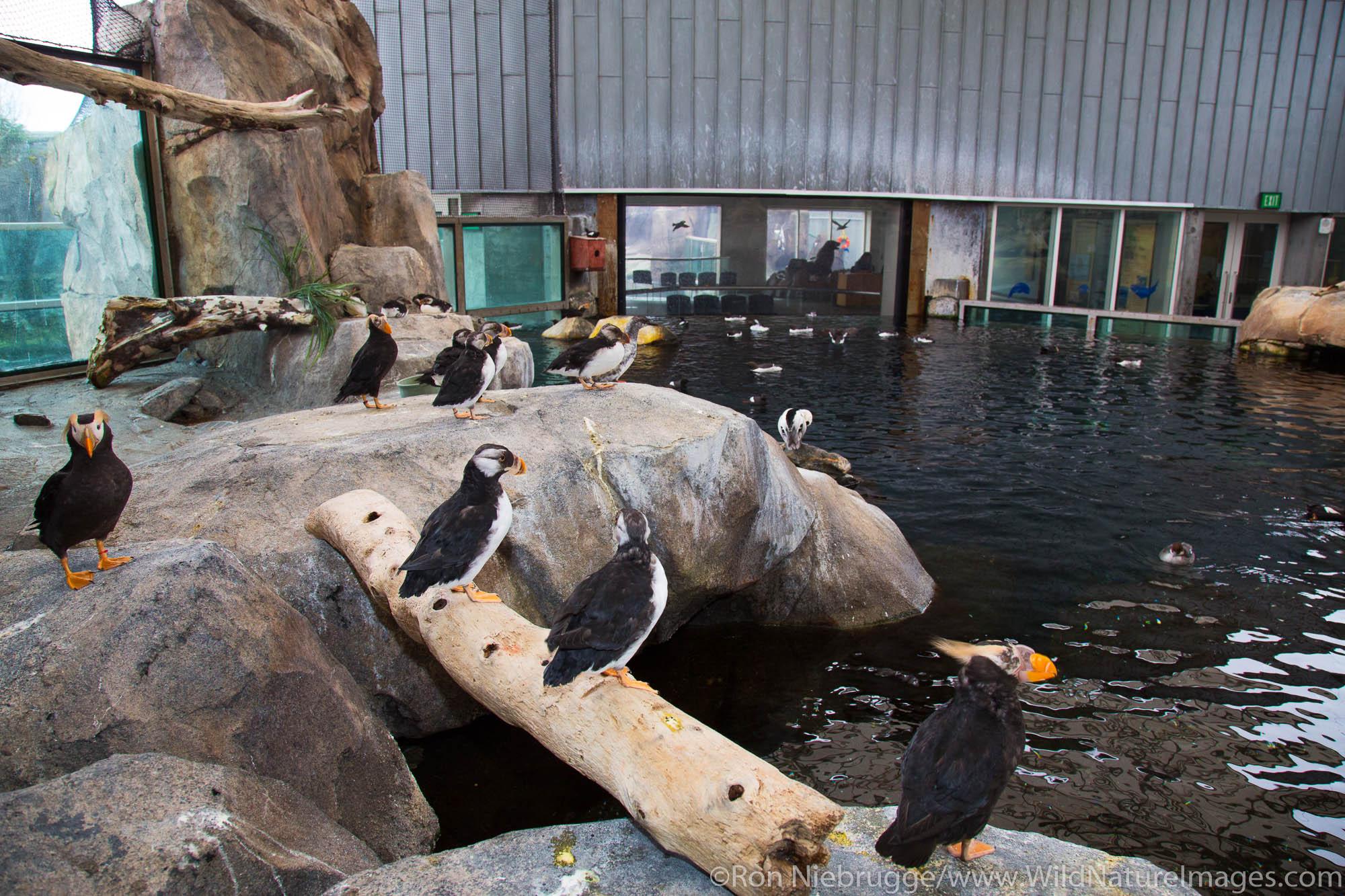 Sea Bird Exhibit, Alaska SeaLife Center, Seward, Alaska