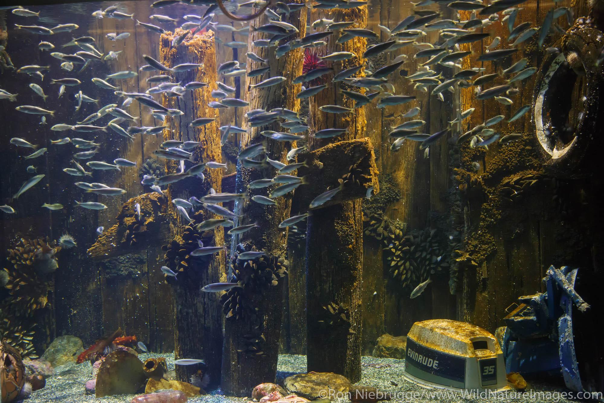 Fish exhibit, Alaska SeaLife Center, Seward, Alaska.