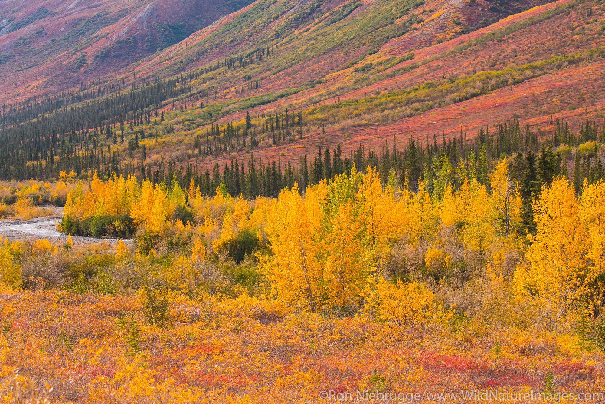 Autumn colors in the Brooks Range Arctic Alaska.