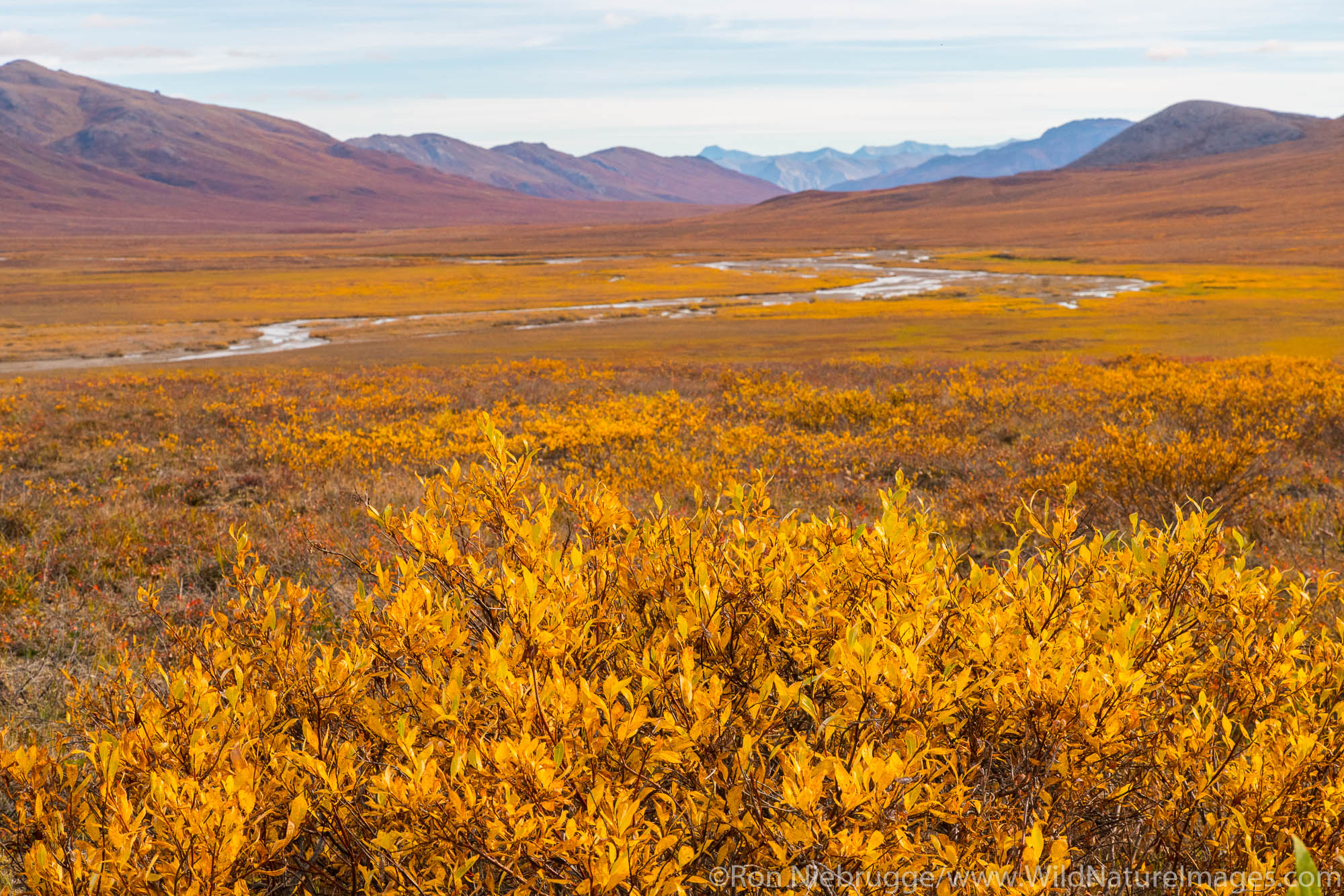 Autumn colors in the Brooks Range, Arctic Alaska.