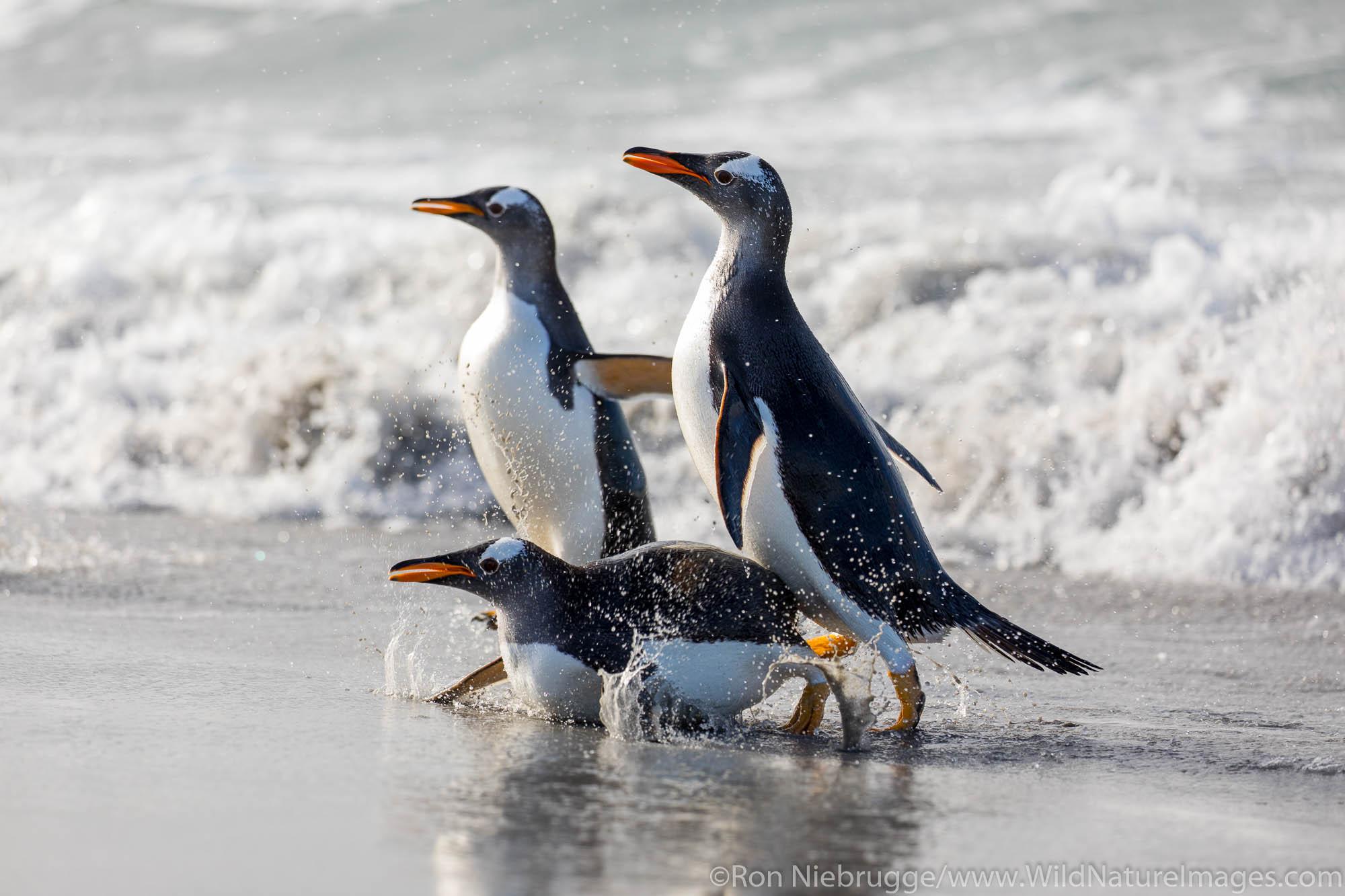 Falklands, Falkland islands, photos, photo