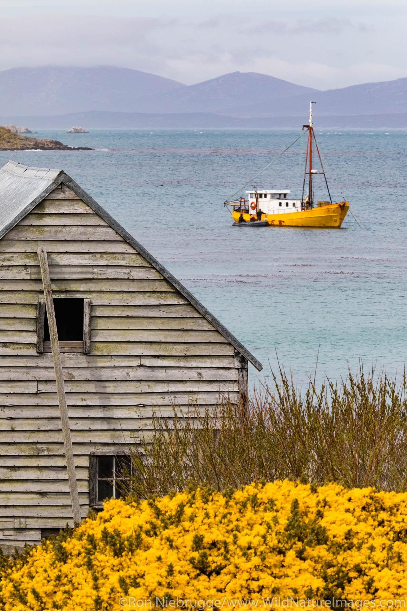 Carcass Island, Falkland Islands.