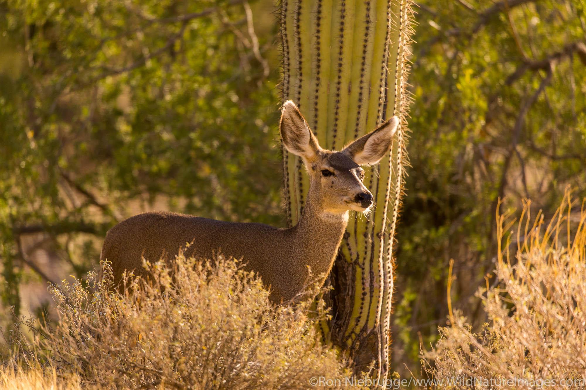 Tucson, Arizona, photo