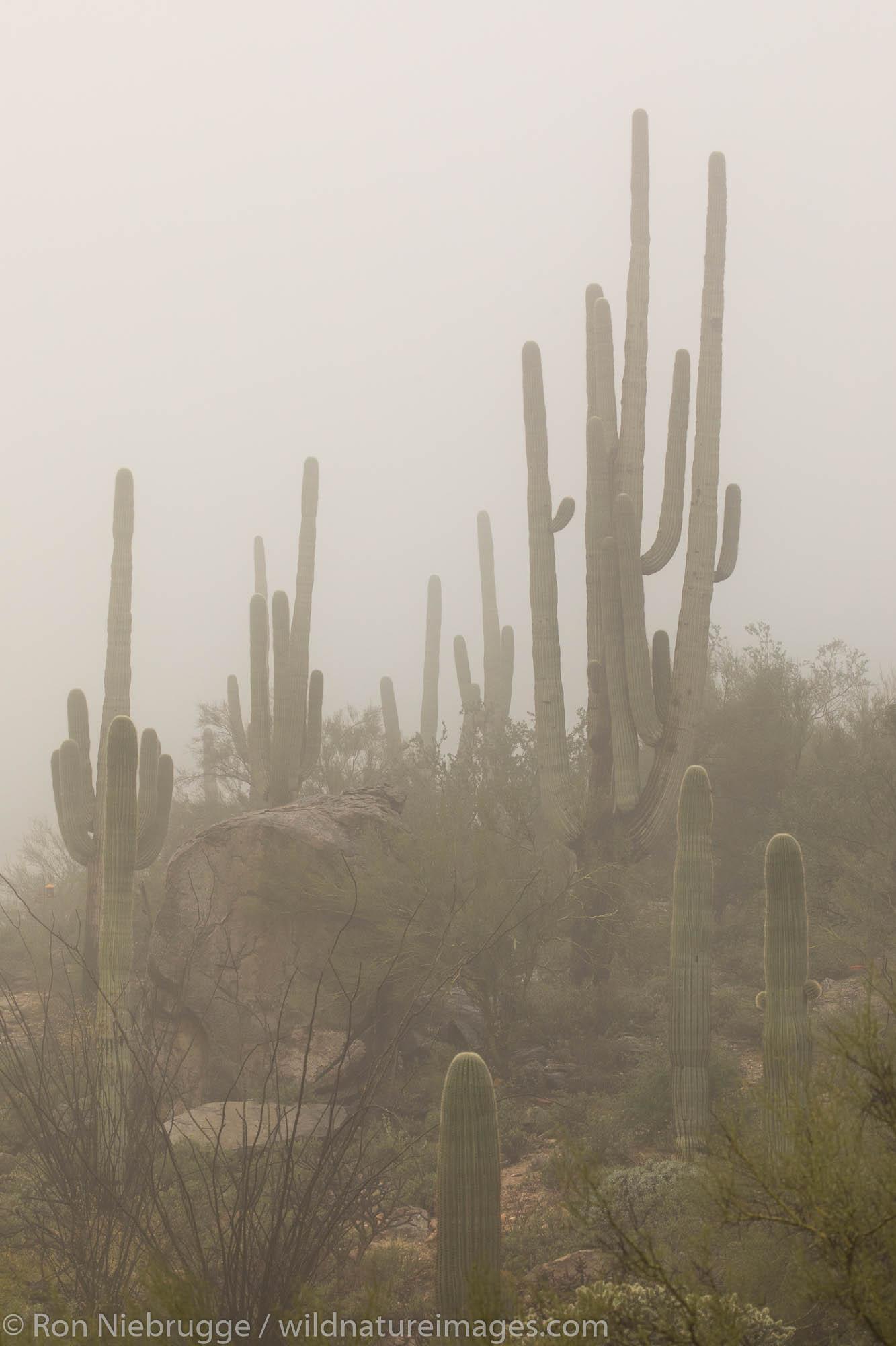 Desert rain.  Arizona.