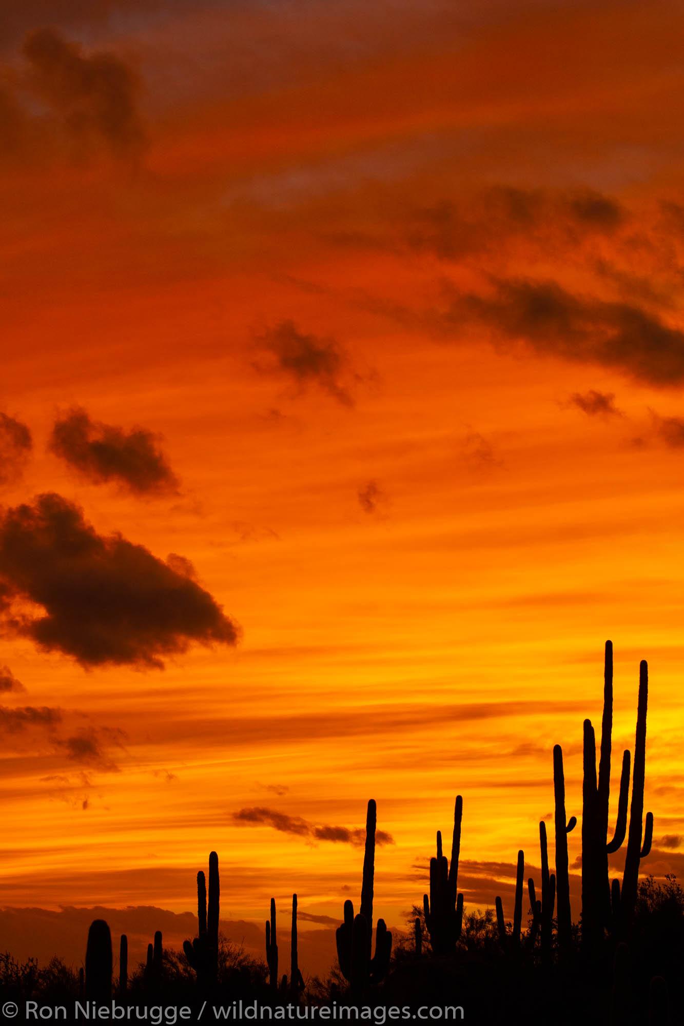 Marana, near Tucson, Arizona.