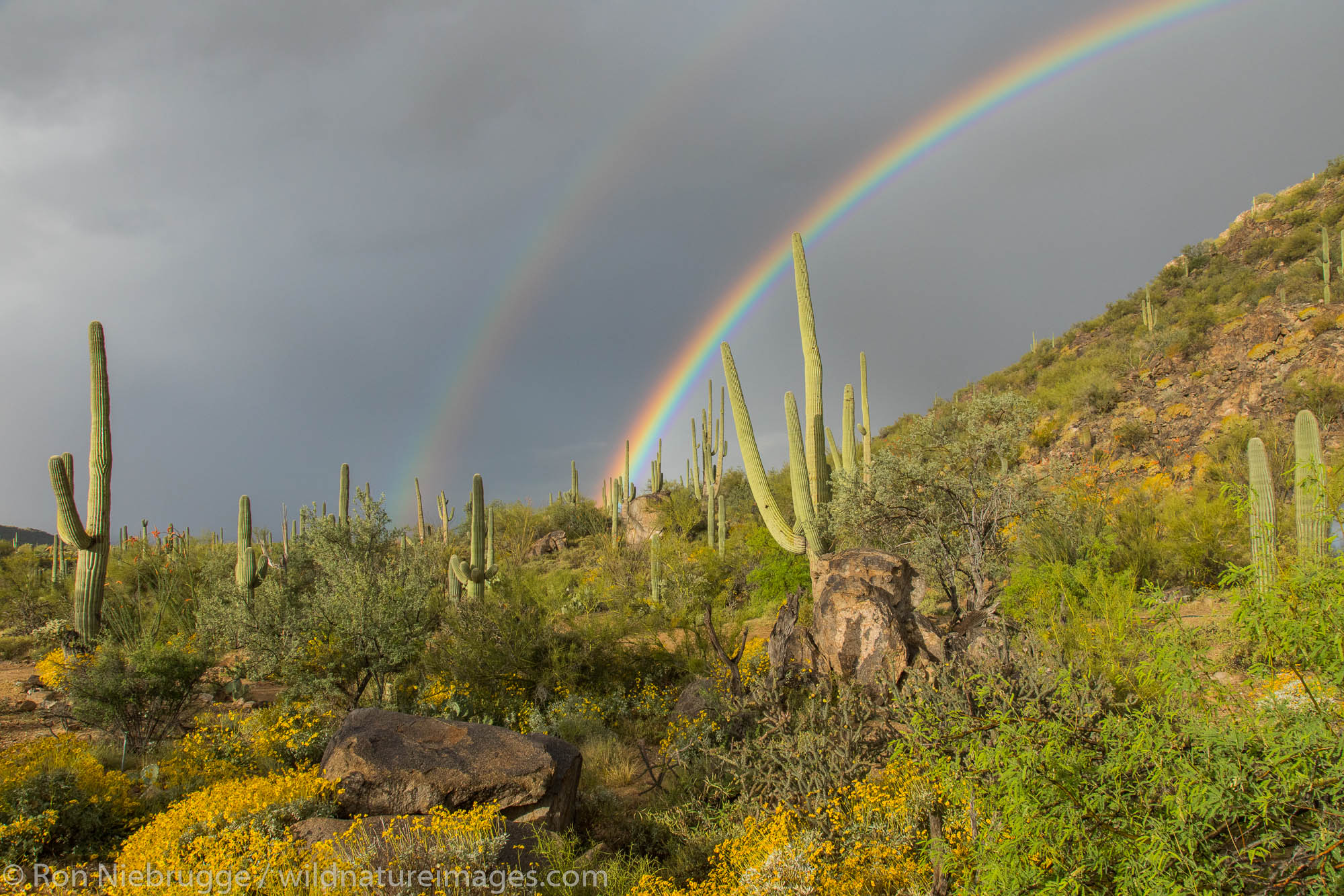 Desert rainbow, Arizona.