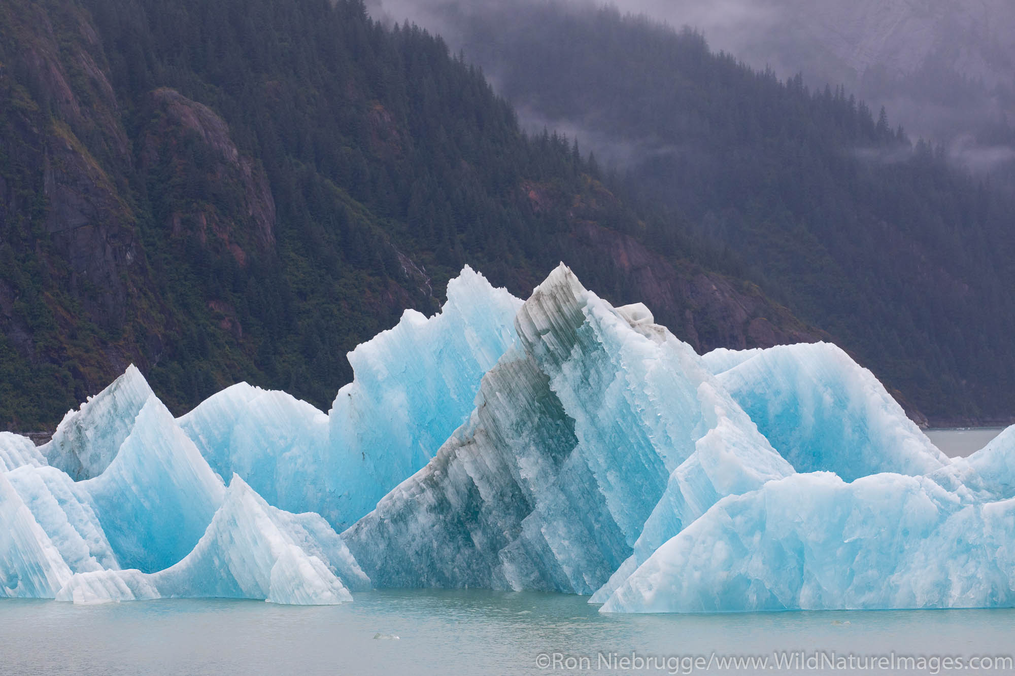 Iceberg. Endicott Arm, Alaska.