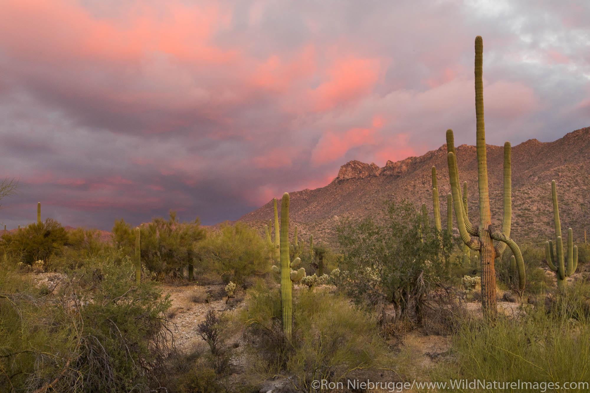 Sonoran Desert sunset, Arizona.