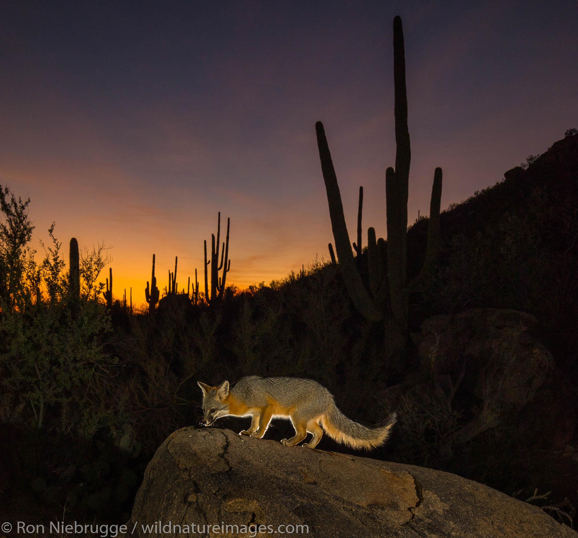 Tortolita Mountains, Marana, near Tucson, Arizona.