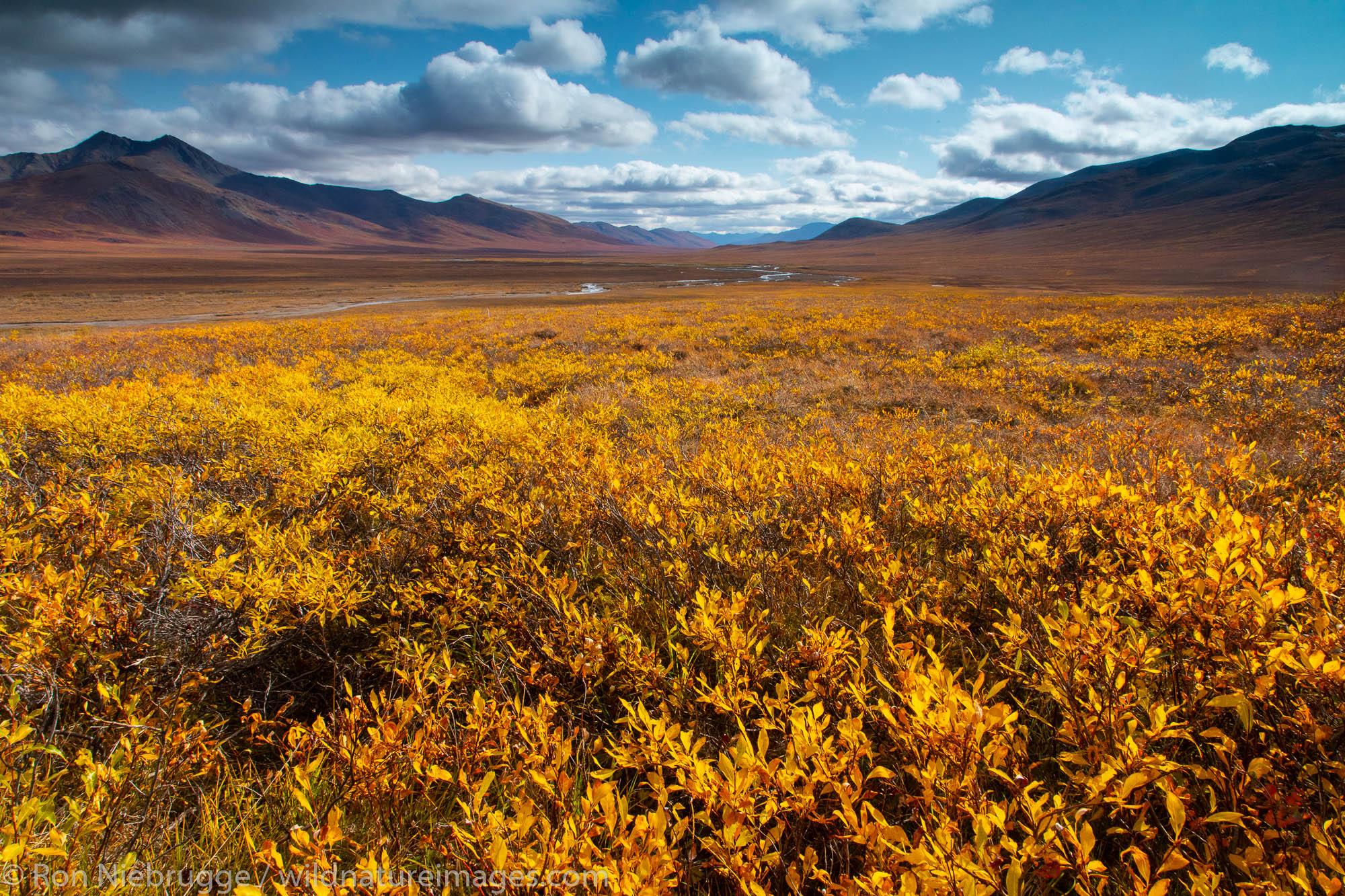 Autumn in the Brooks Range, Dalton Highway, Alaska.