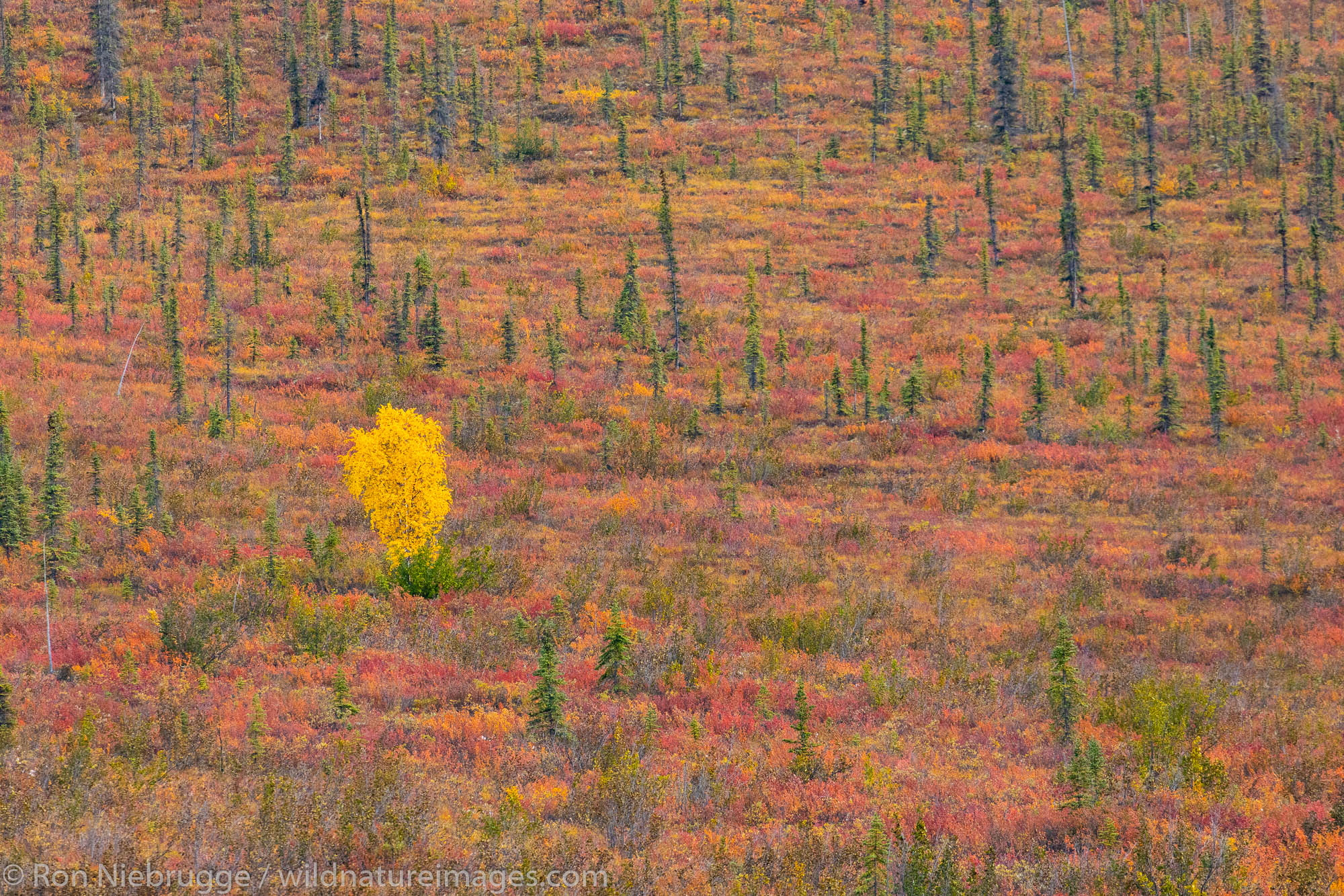 Autumn in the Brooks Range Dalton Highway Alaska.