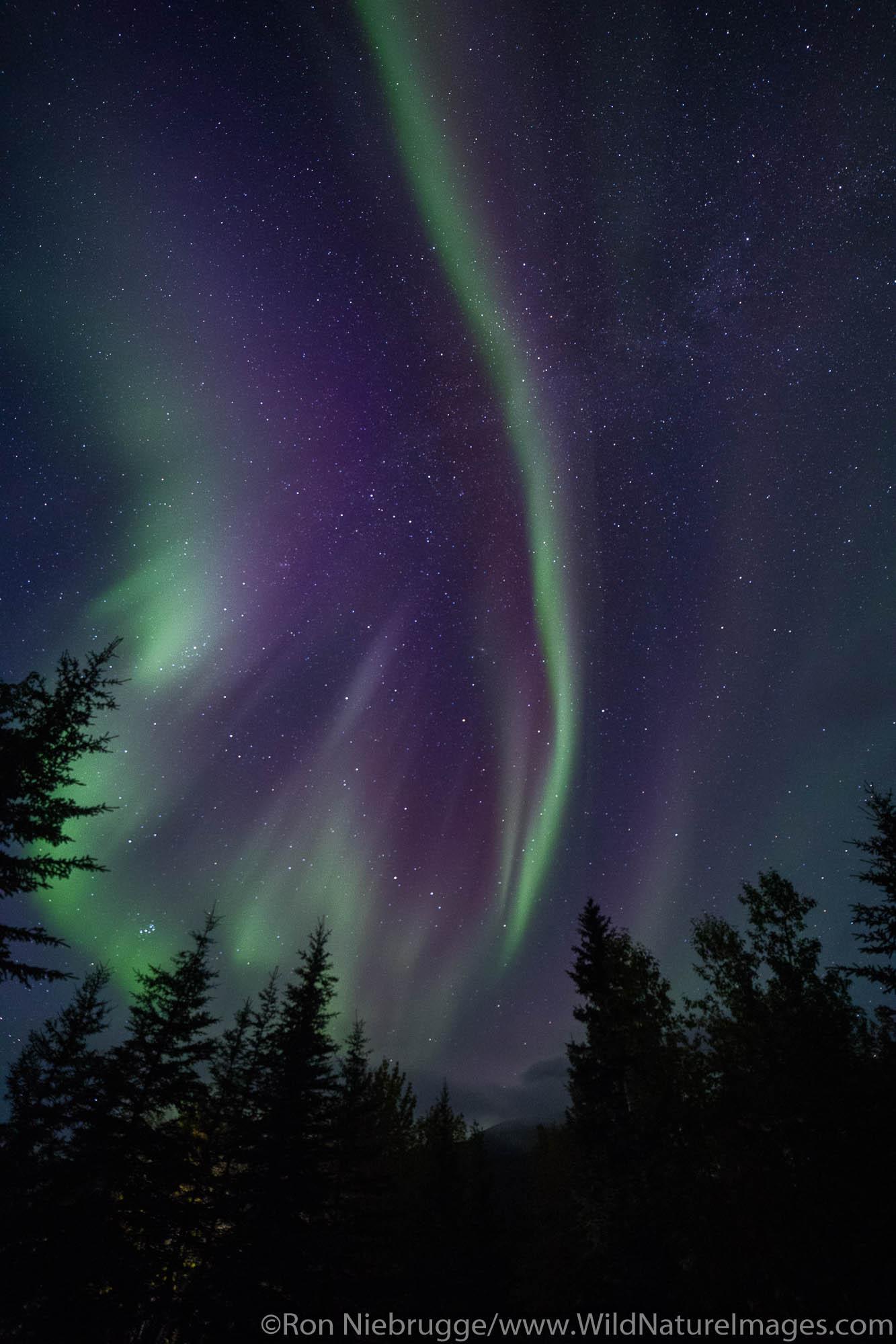 Northern Lights, also known as Aurora borealis, Wiseman, Alaska