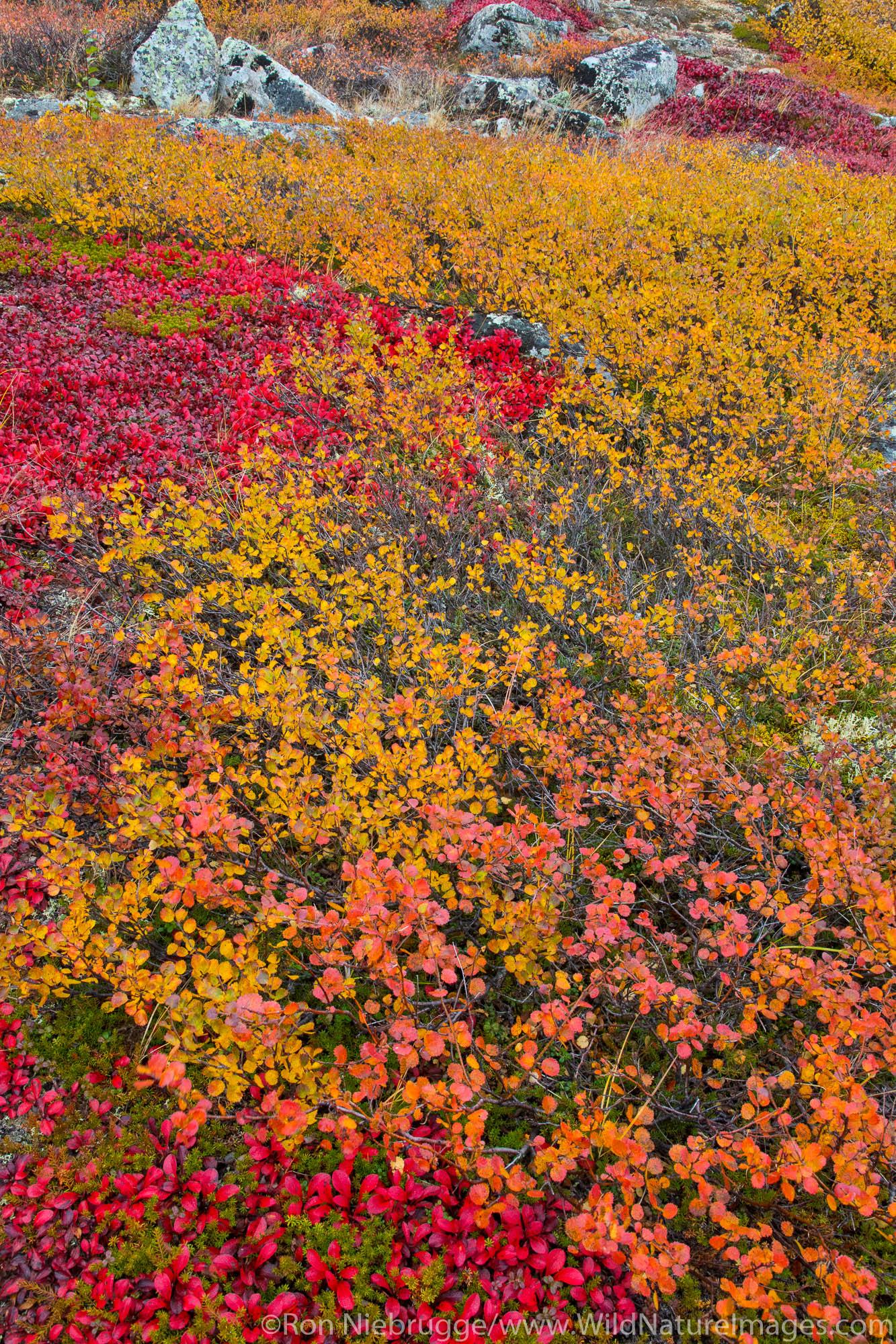 Autumn colors along the Dalton Highway, Alaska.