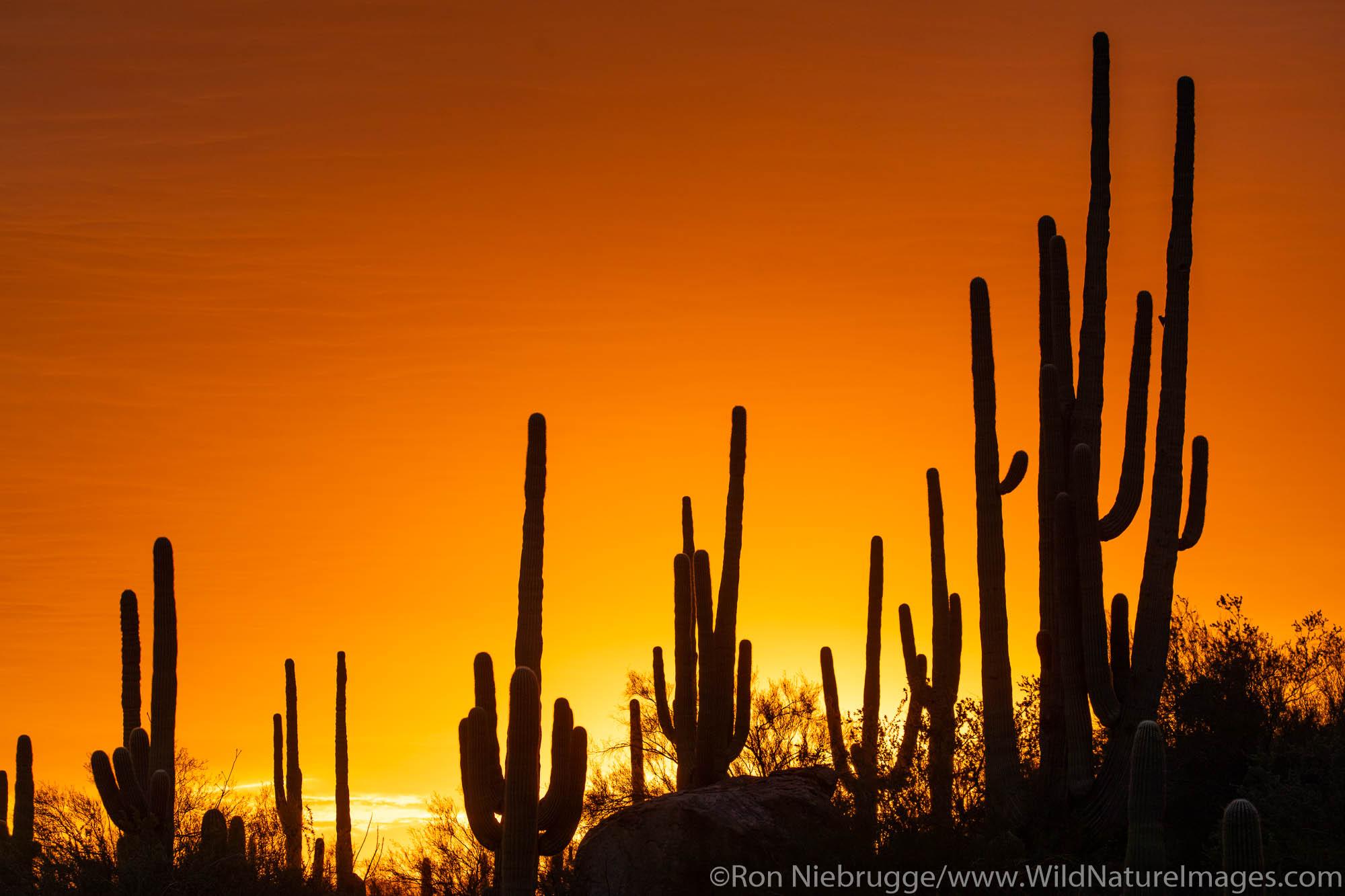 Sunset in the Tortolita Mountains, Marana, near Tucson, Arizona.