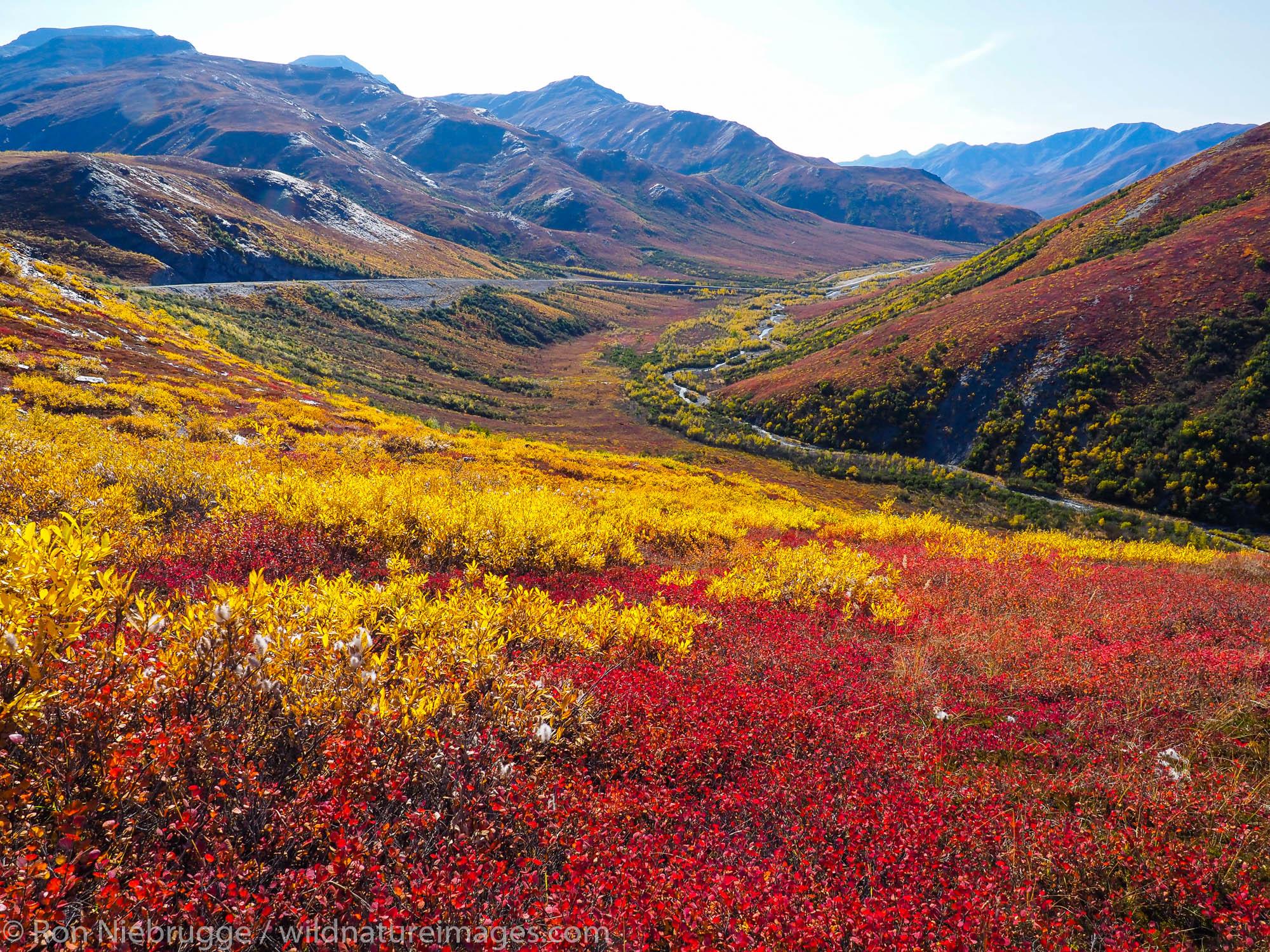 Autumn colors along the Dalton Highway, Brooks Range, Alaska.
